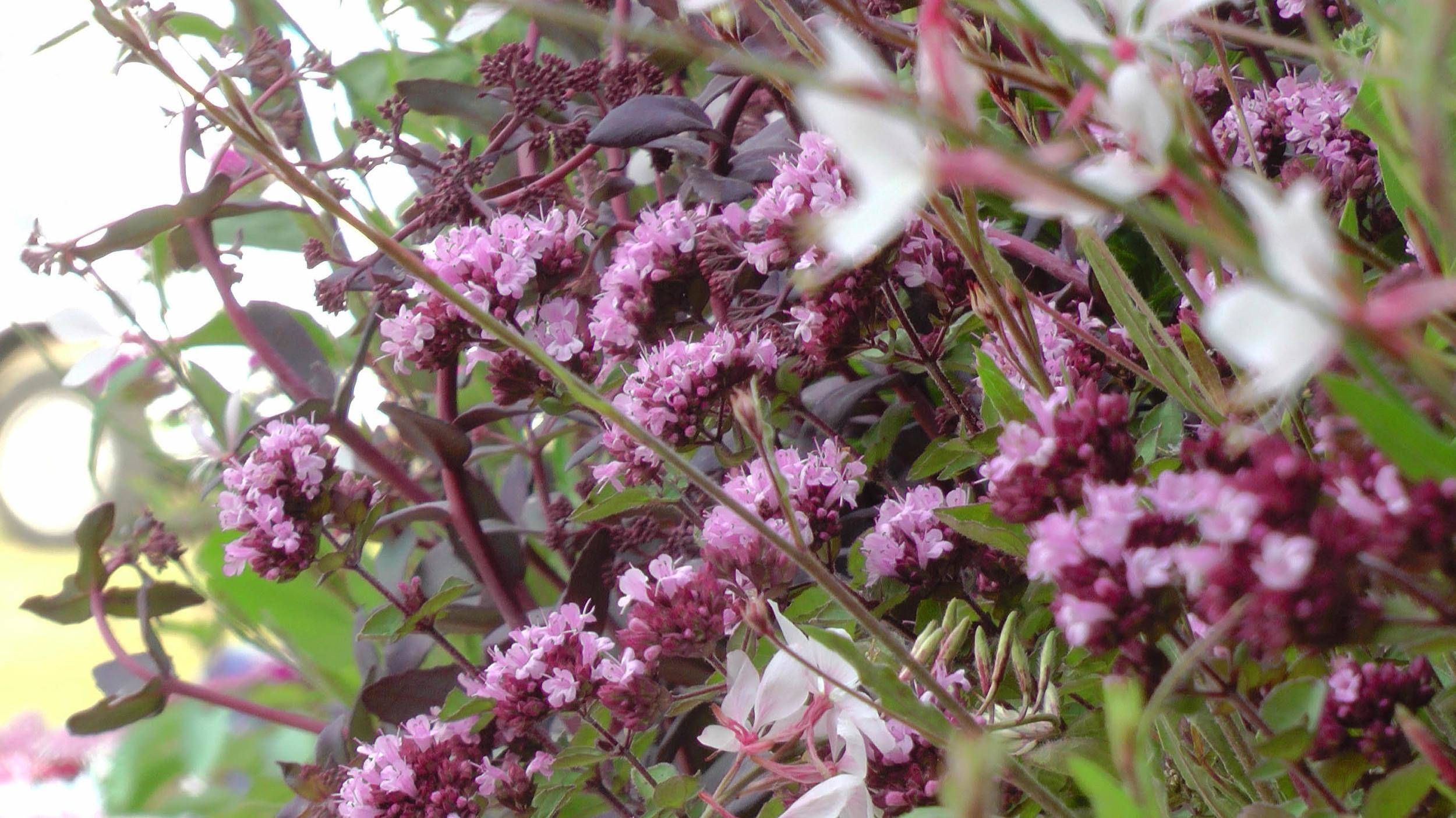 Cheshire Garden Design: RHS Tatton Flower Show 'Precious Resources Garden': Perennial planting