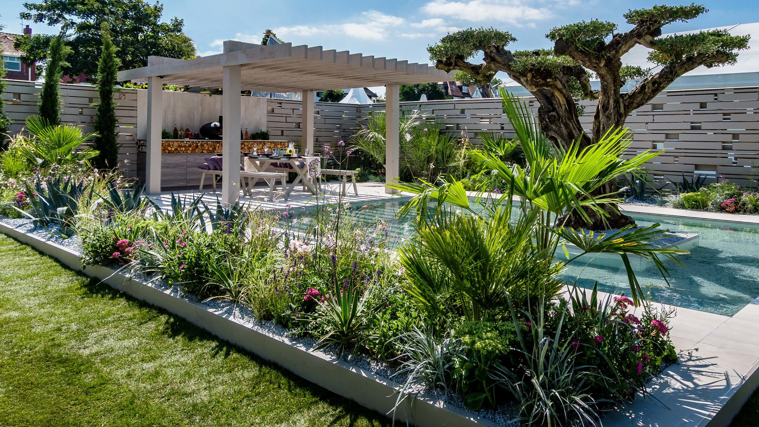 Southport Garden Design: A View Of The Olive Tree: