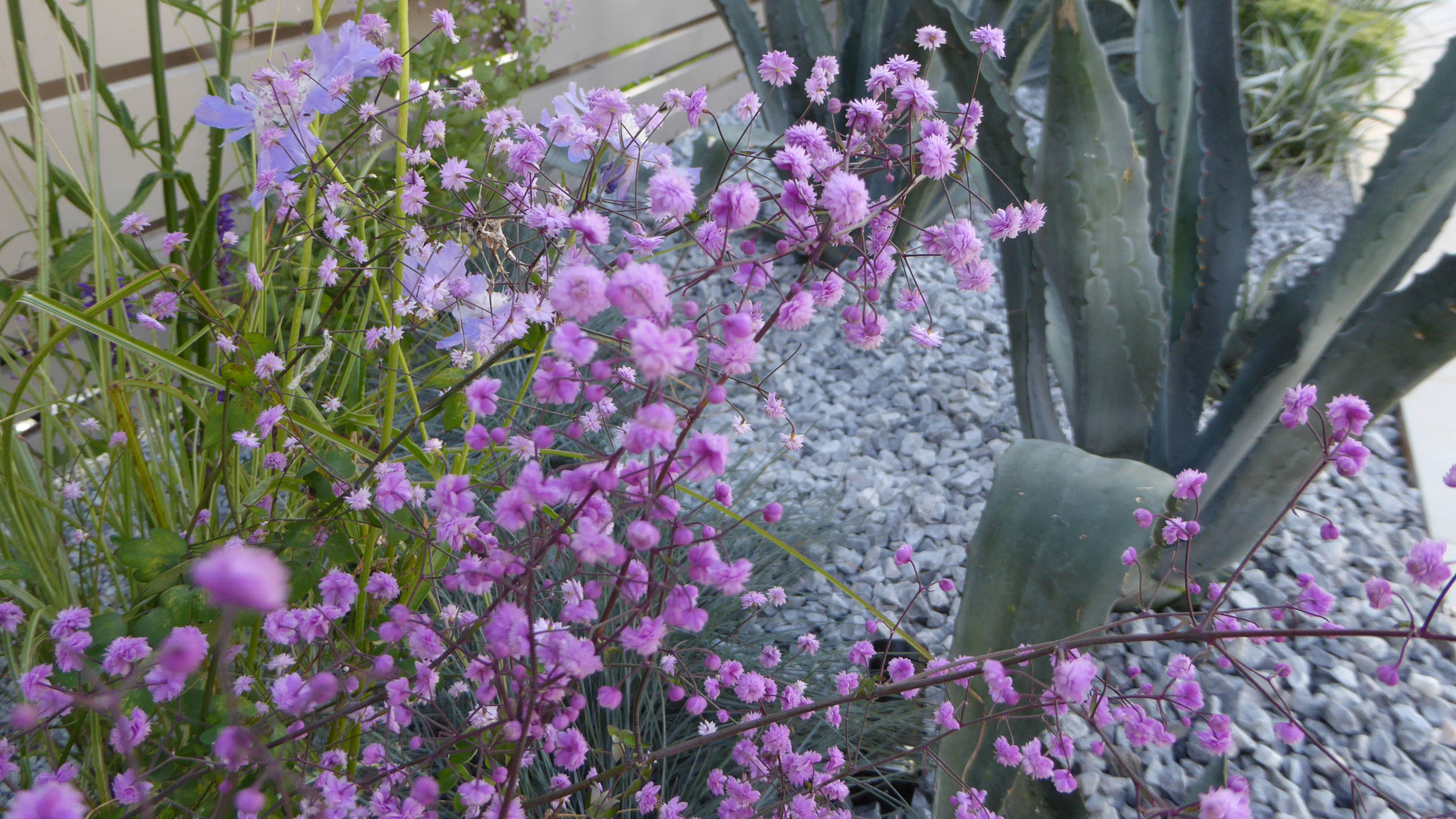 Southport Garden Design: A View Of The Olive Tree: Planted Border