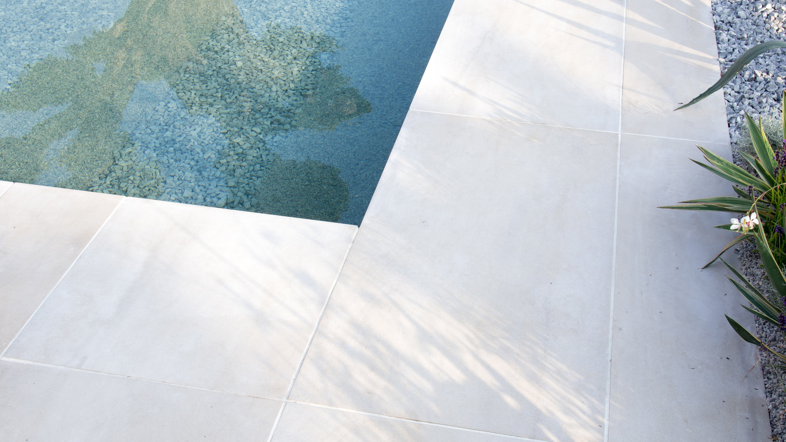Southport Garden Design: A View Of The Olive Tree: Porcelain Paving And Pool