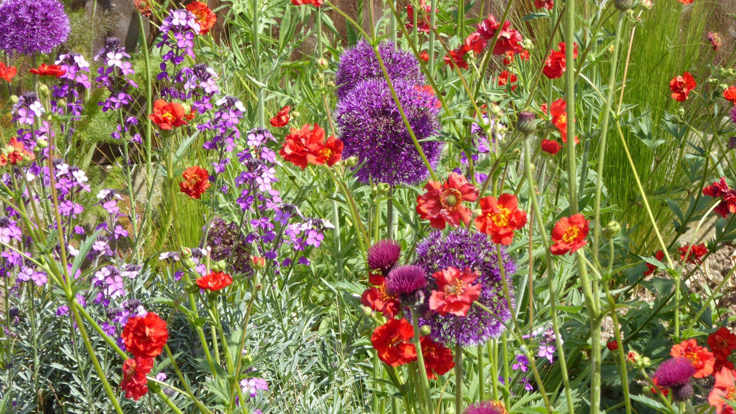Cheshire Garden Design: Interlocking Curves and Acer (Front Garden) Perennials