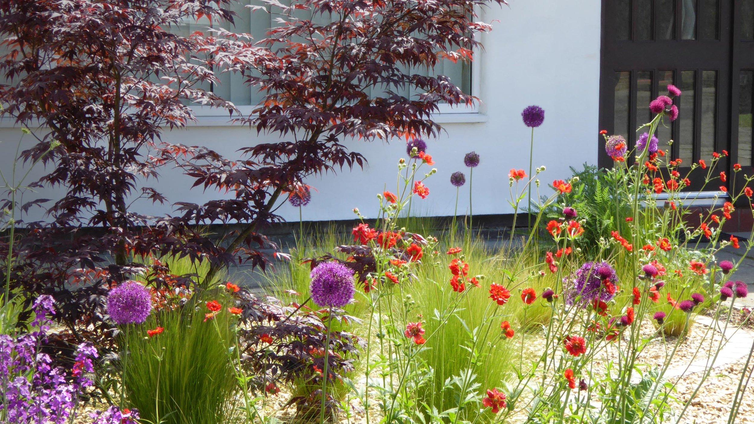 Cheshire Garden Design: Interlocking Curves and Acer (Front Garden)