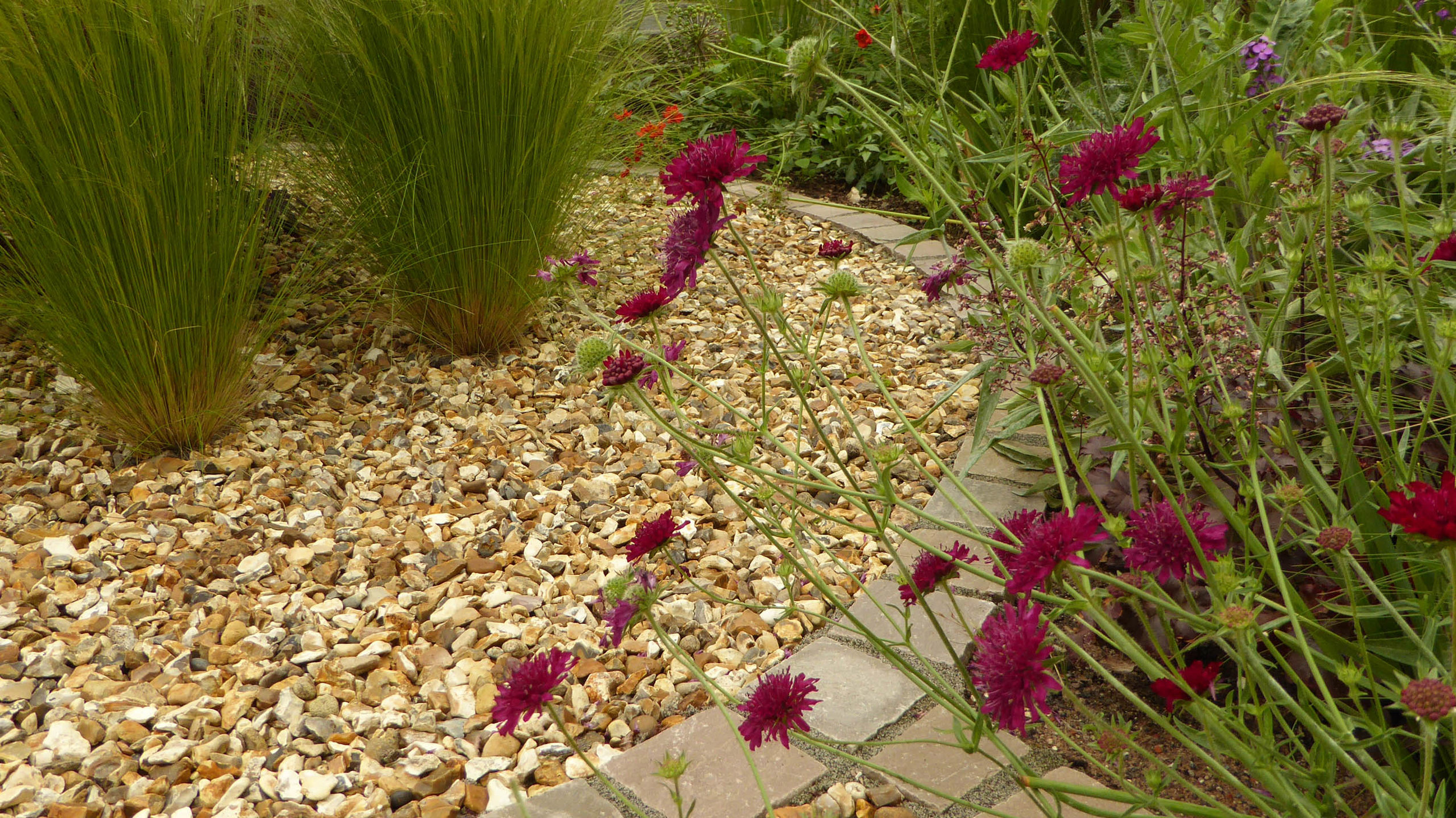 Cheshire Garden Design: Interlocking Curves and Acer (Front Garden) Grasses and Gravel