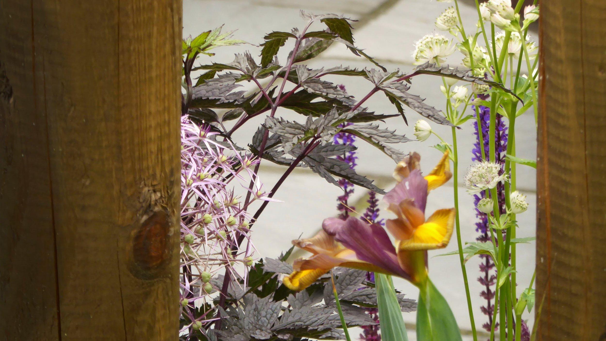 gardendesignbillinge (4).jpg