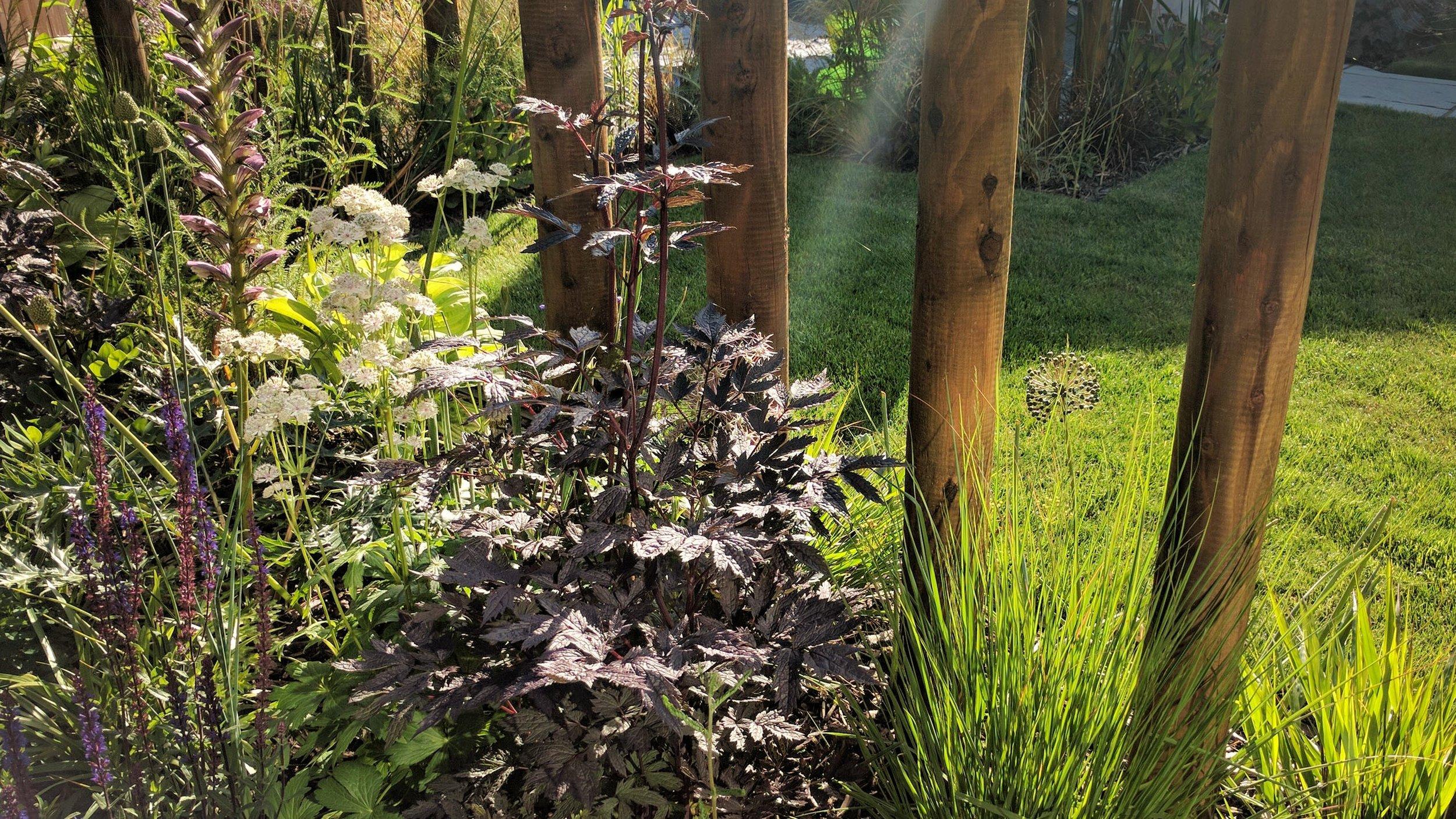 gardendesignbillinge (25).jpg