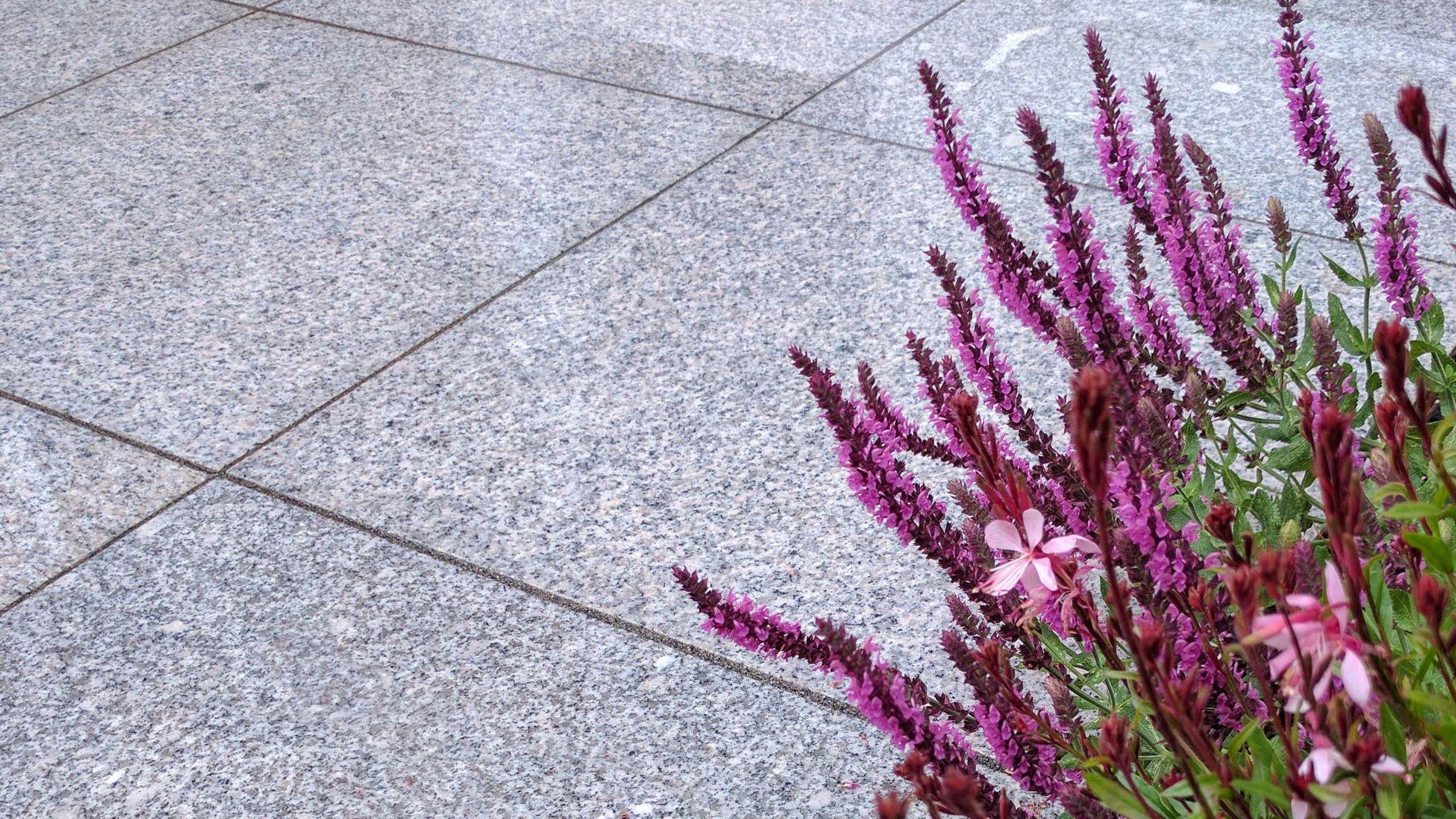 GardenDesignLancaster 4.jpg