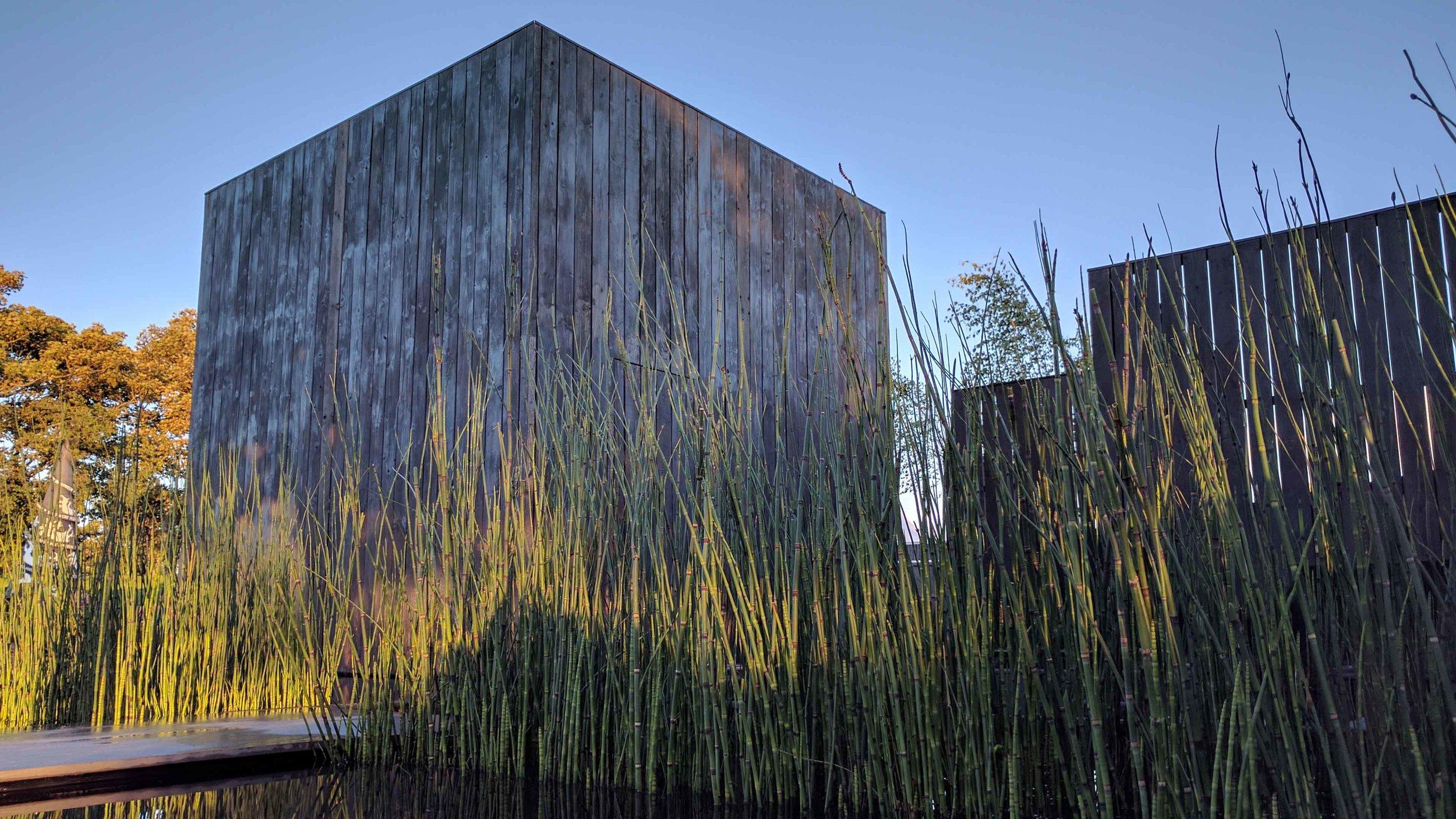 Southport Garden Design: Kuro: Evening Light