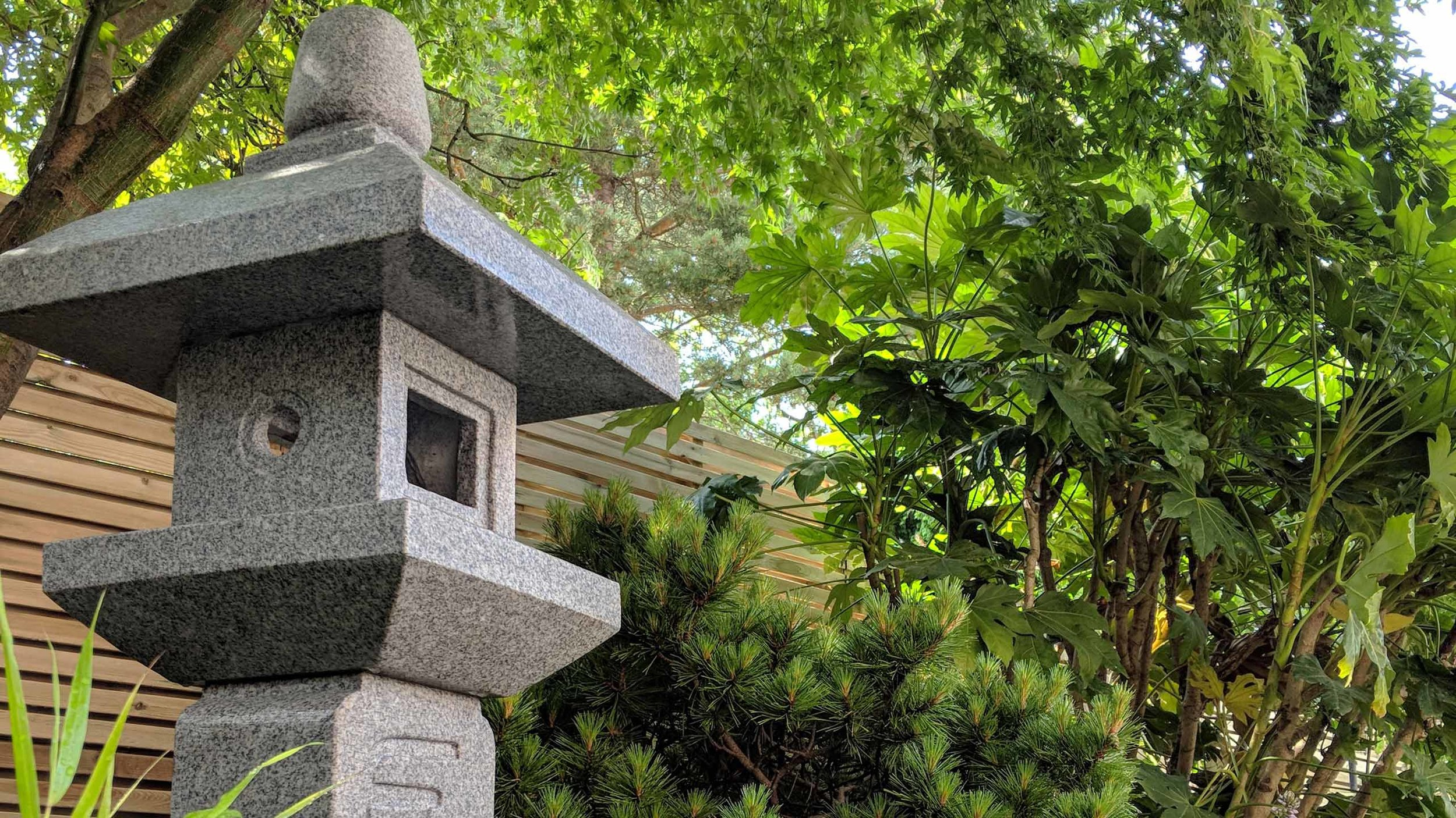 Cheshire Garden Design: Japanese garden with Oribe (Lantern): Screening and Acer palmatum 'Bloodgood'