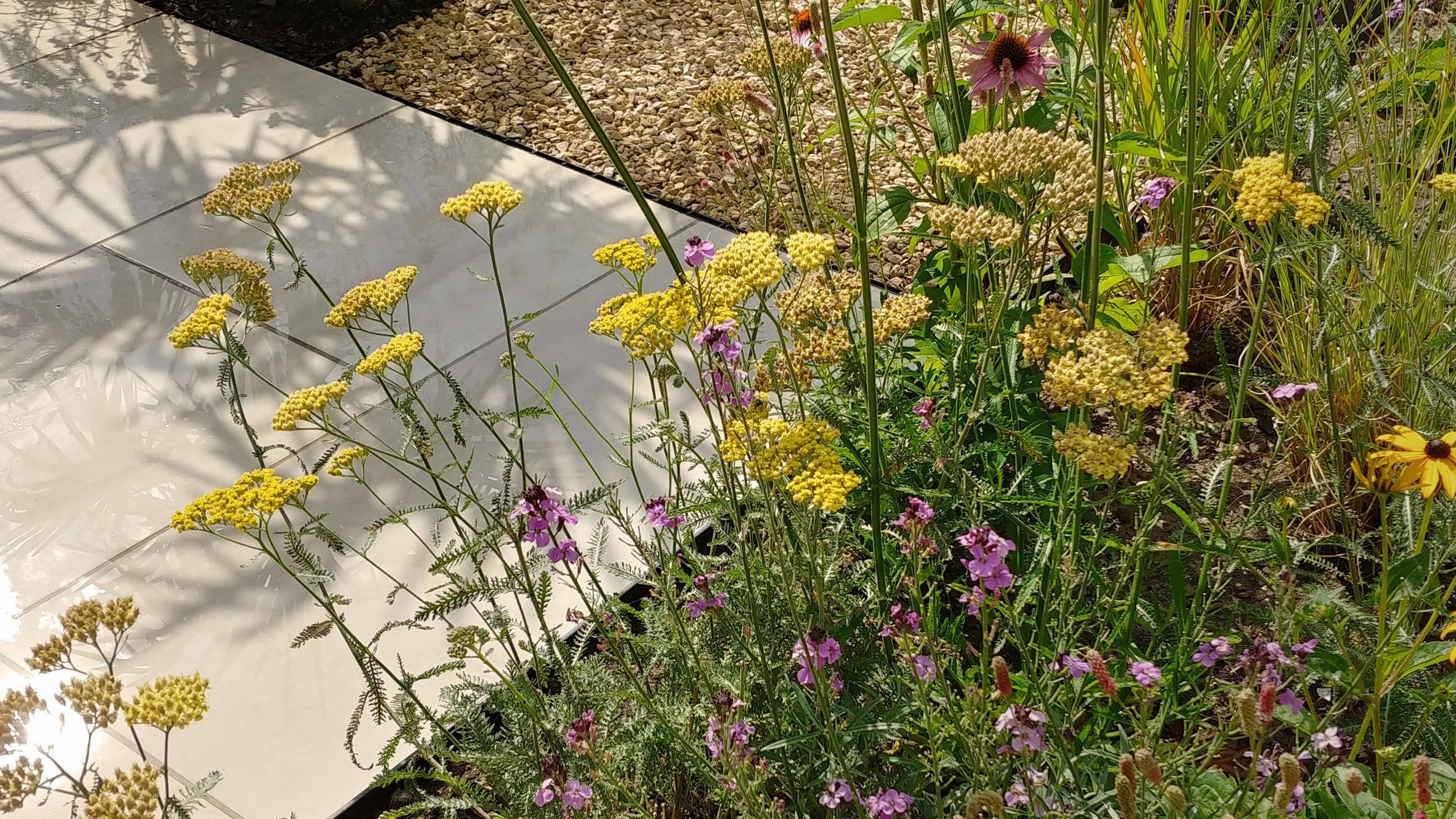 Garden Design Cheshire: Prairie Planting And Porcelain Patio: Porcelain Path and Perennial Border