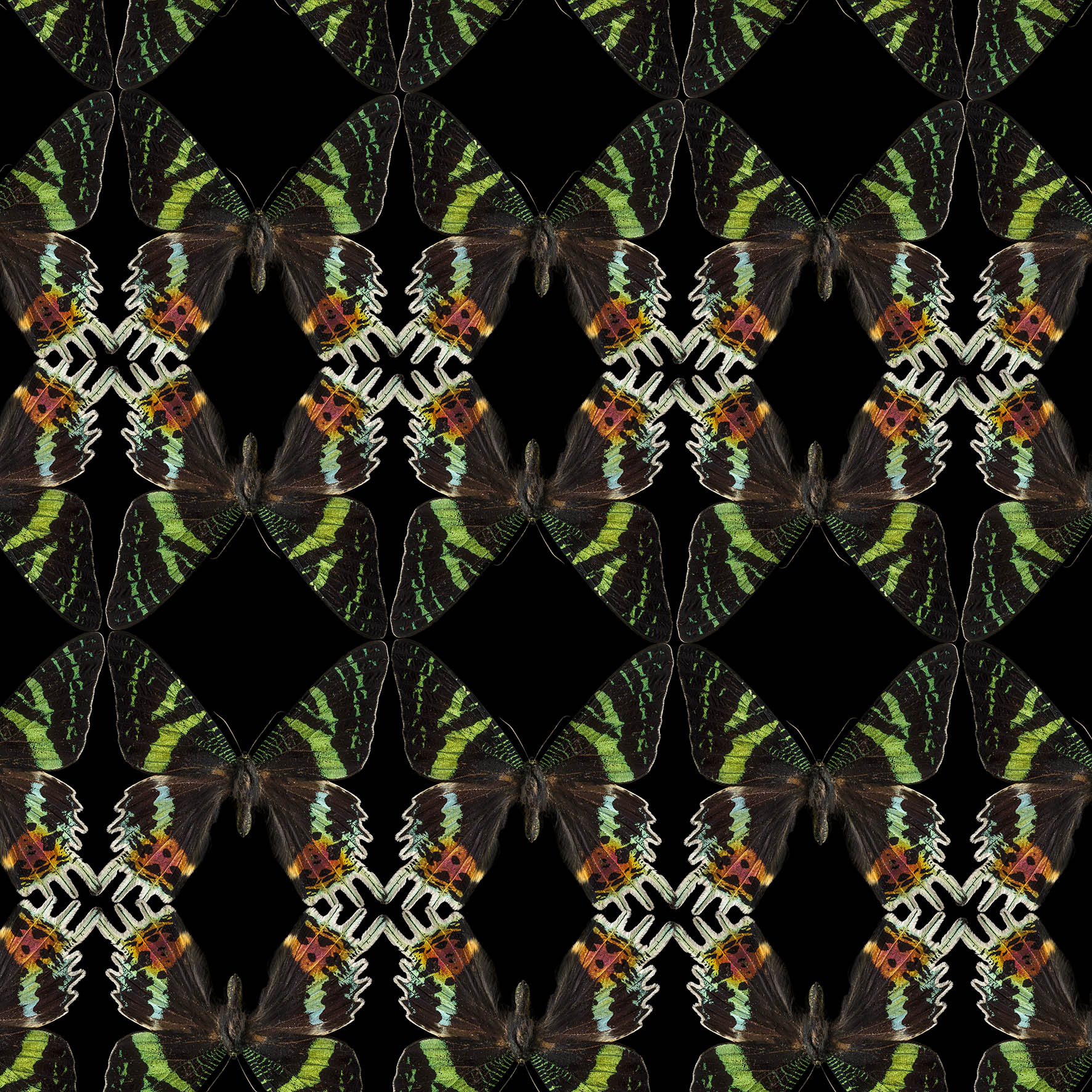 0061_Butterfly-black-green 102015-def.jpg
