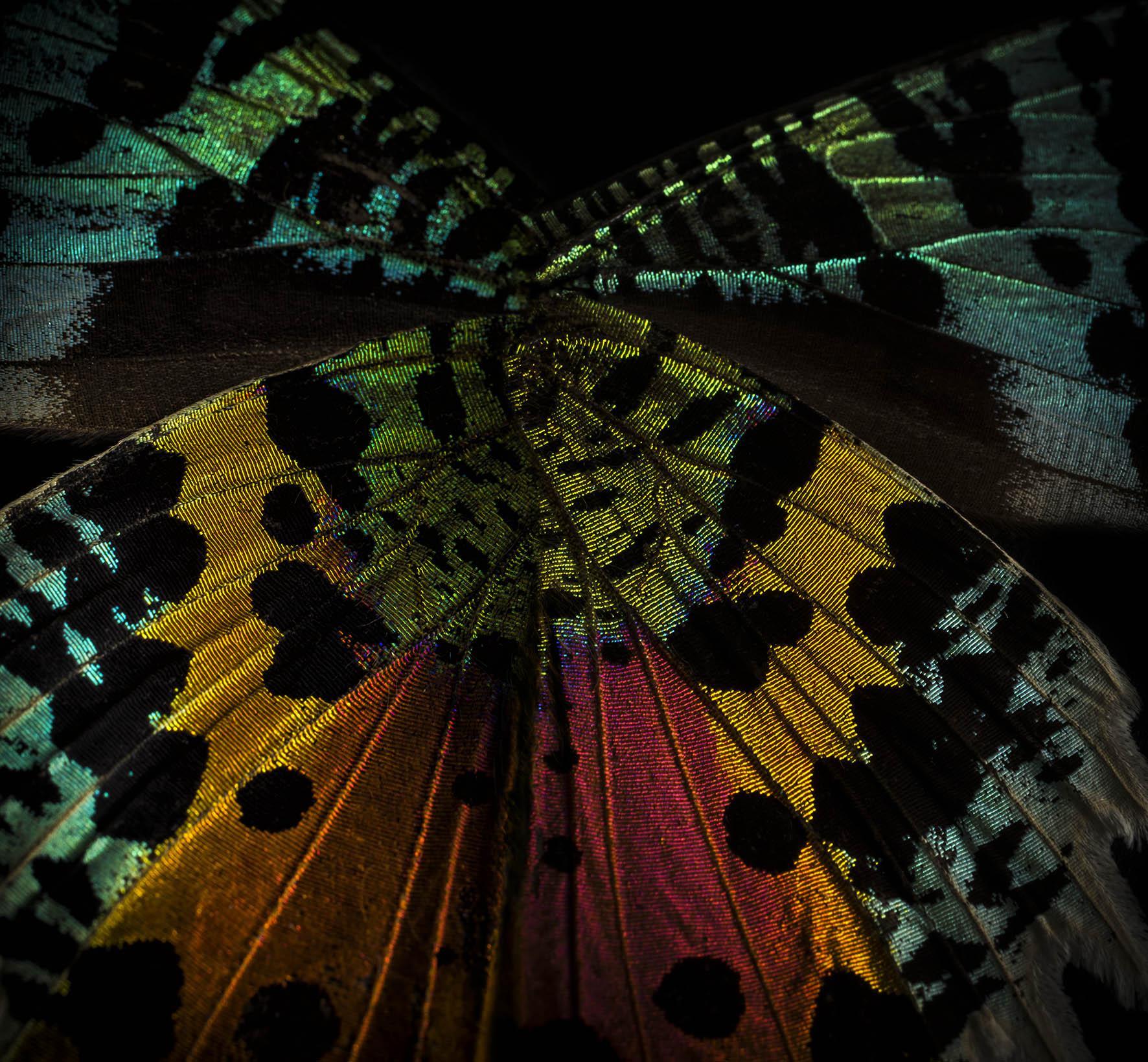 0064_Butterfly 092015-3094-2.jpg