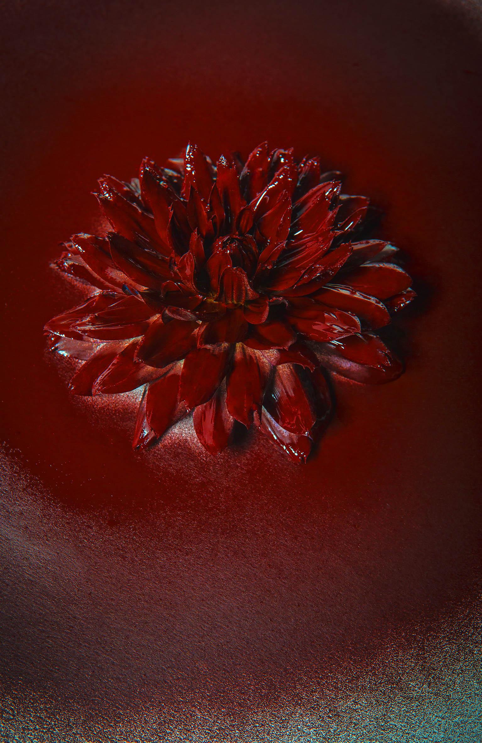 0072_Flower-07092015-9931.jpg