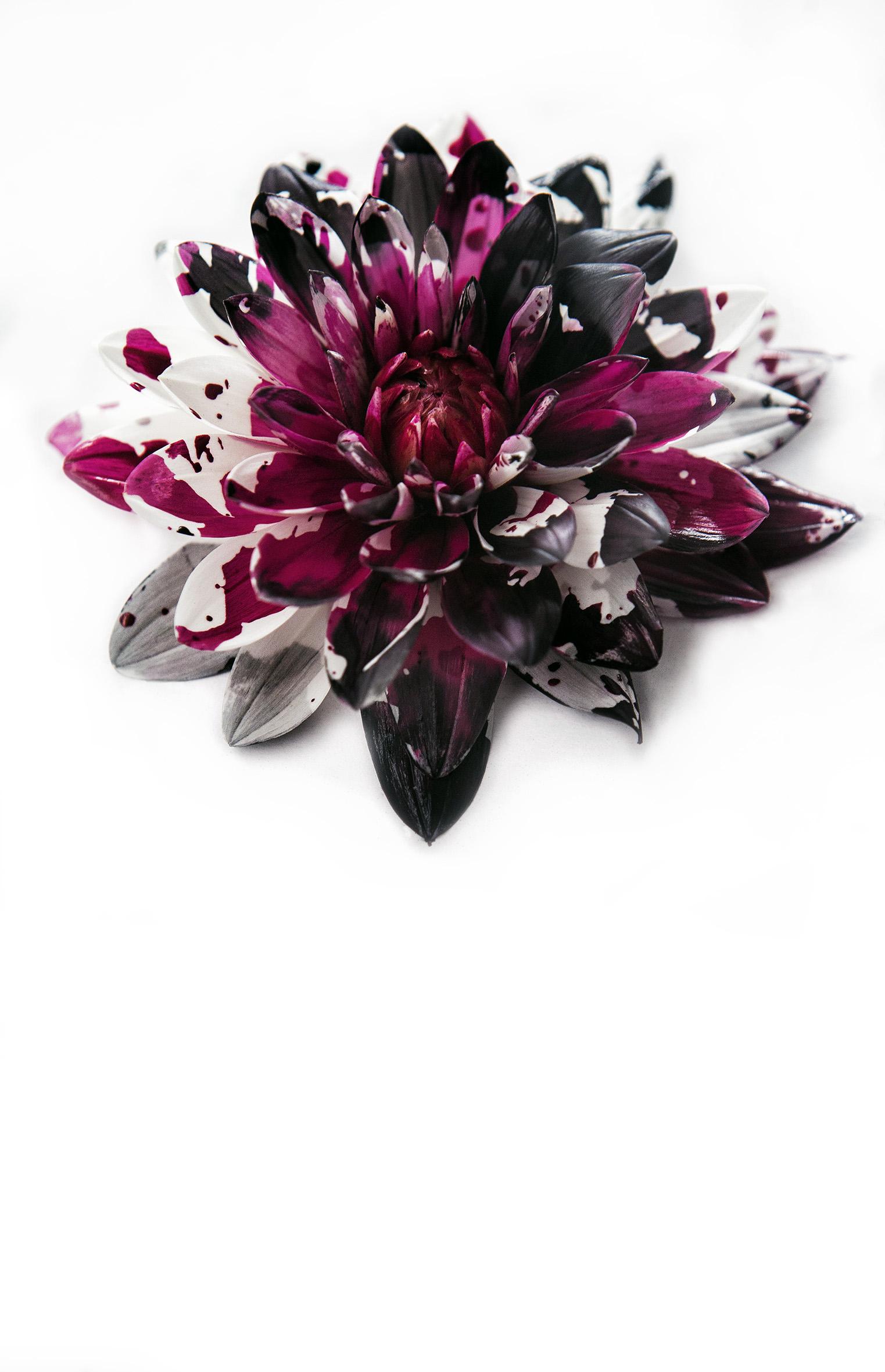 0001_Flower-07092015-0406 copy.jpg
