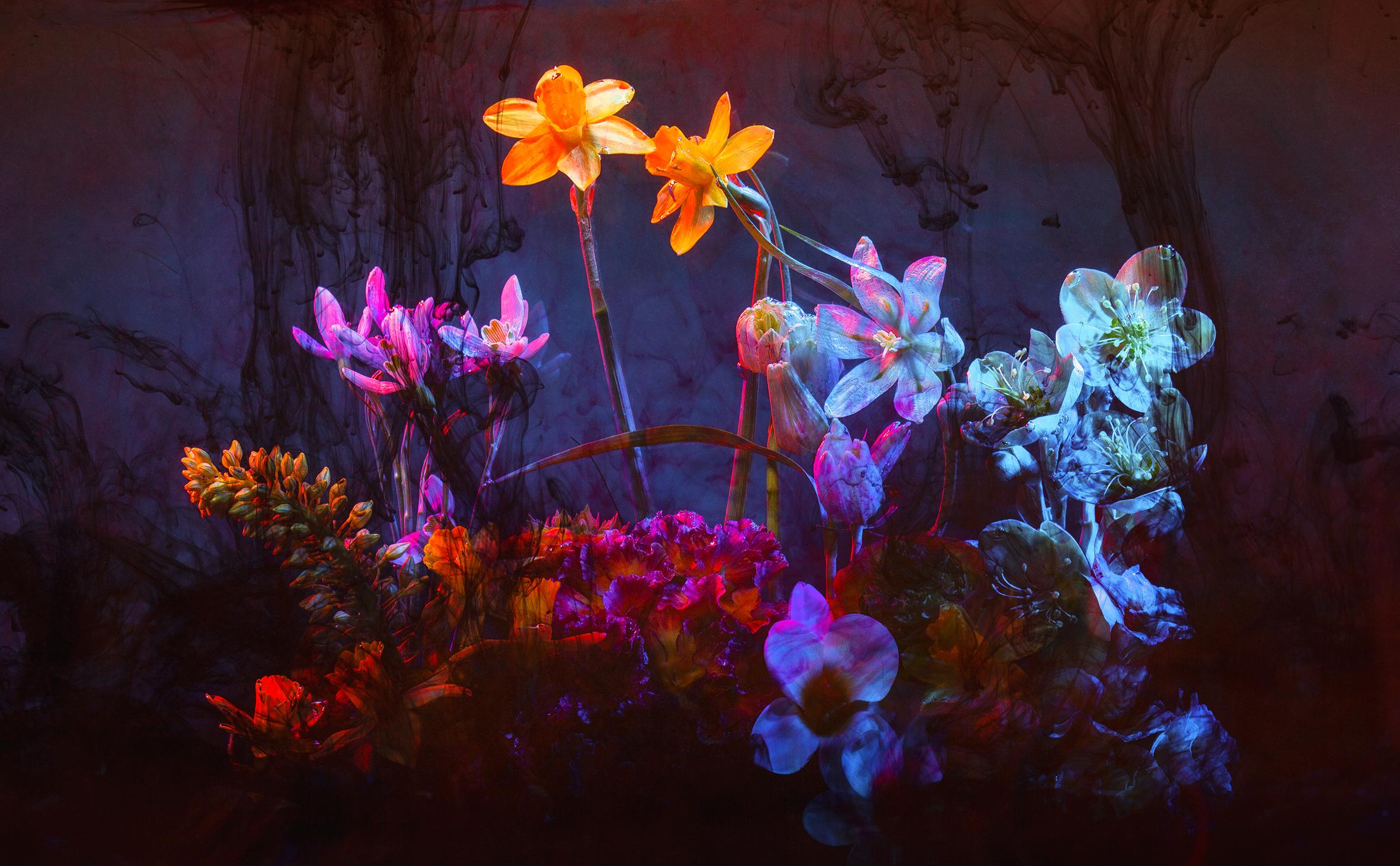 0012_Deborah_Roffel_Flower Still Life-2308.jpg