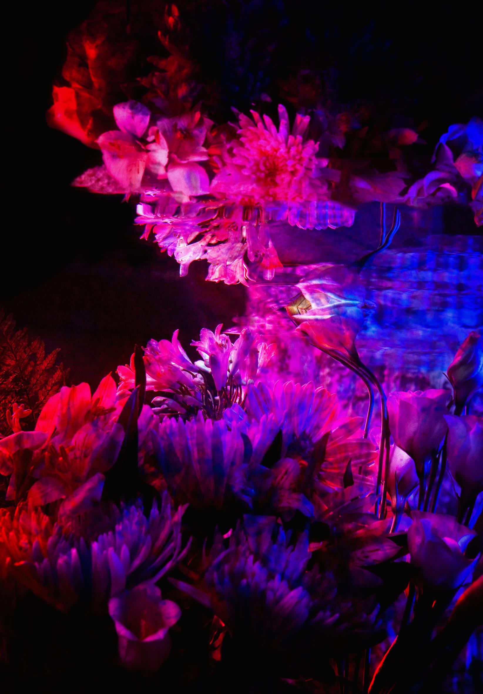 0020_-Bloemen stillleven-aug2013-0210.jpg