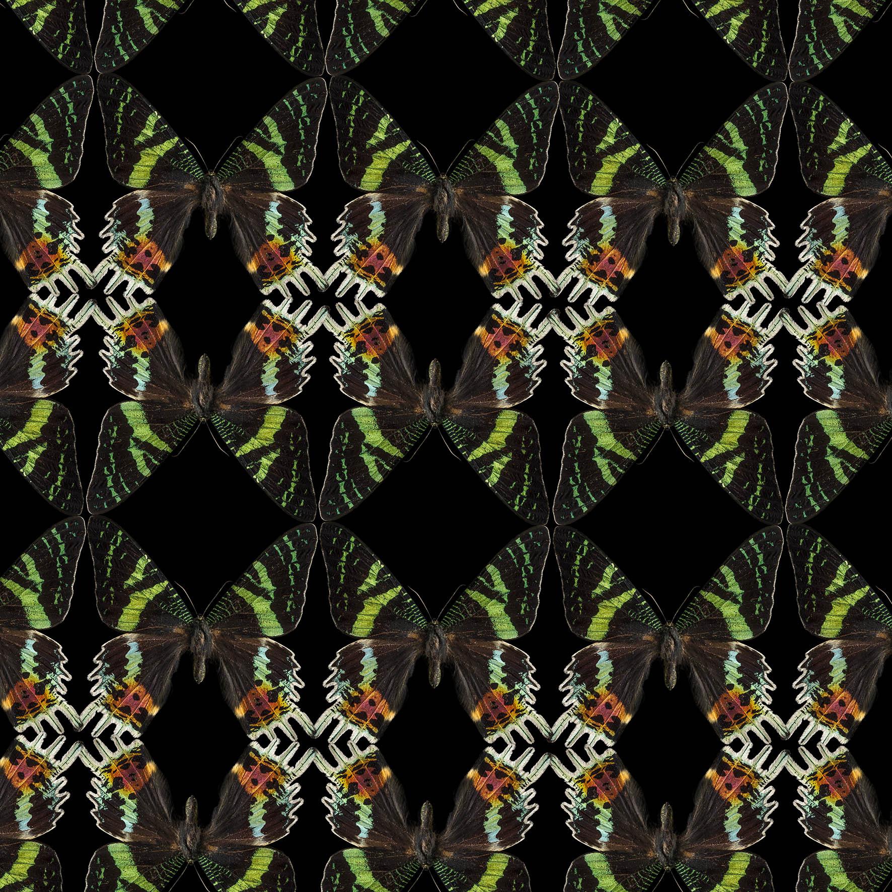 0037_Butterfly-black-green 102015-def.jpg