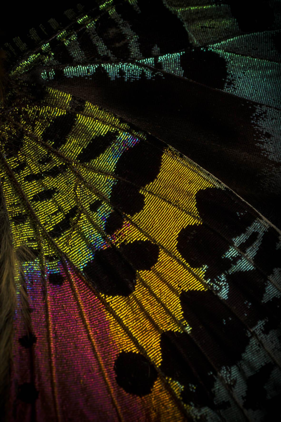 0039_Butterfly 092015-3083.jpg