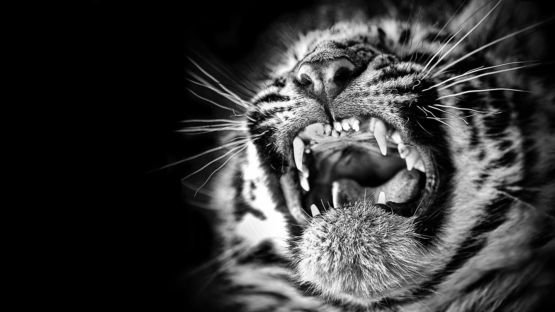 0070_-tiger screaming-deborahroffel.jpg