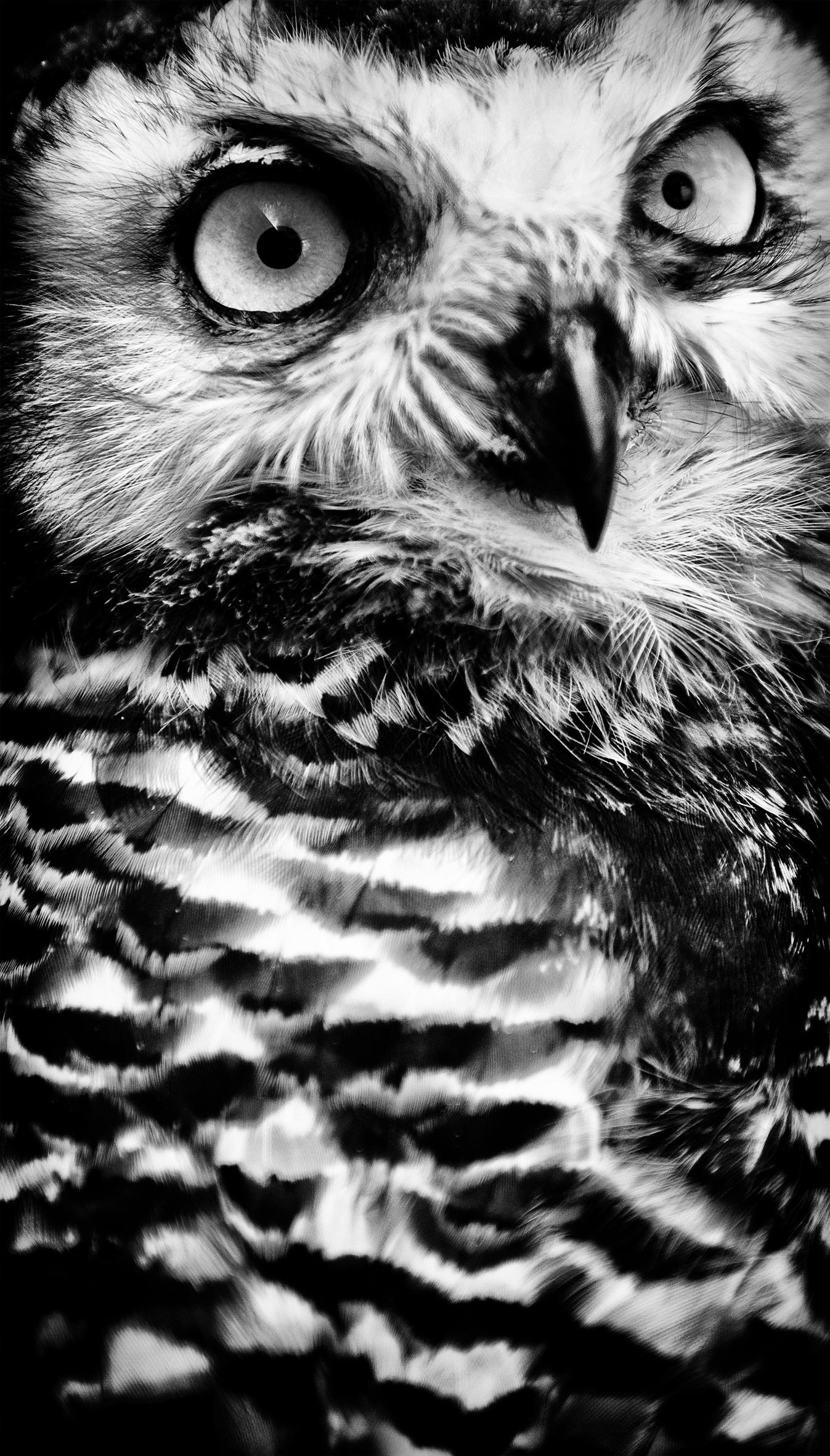 0073_Vogels-aug2013-0728.jpg