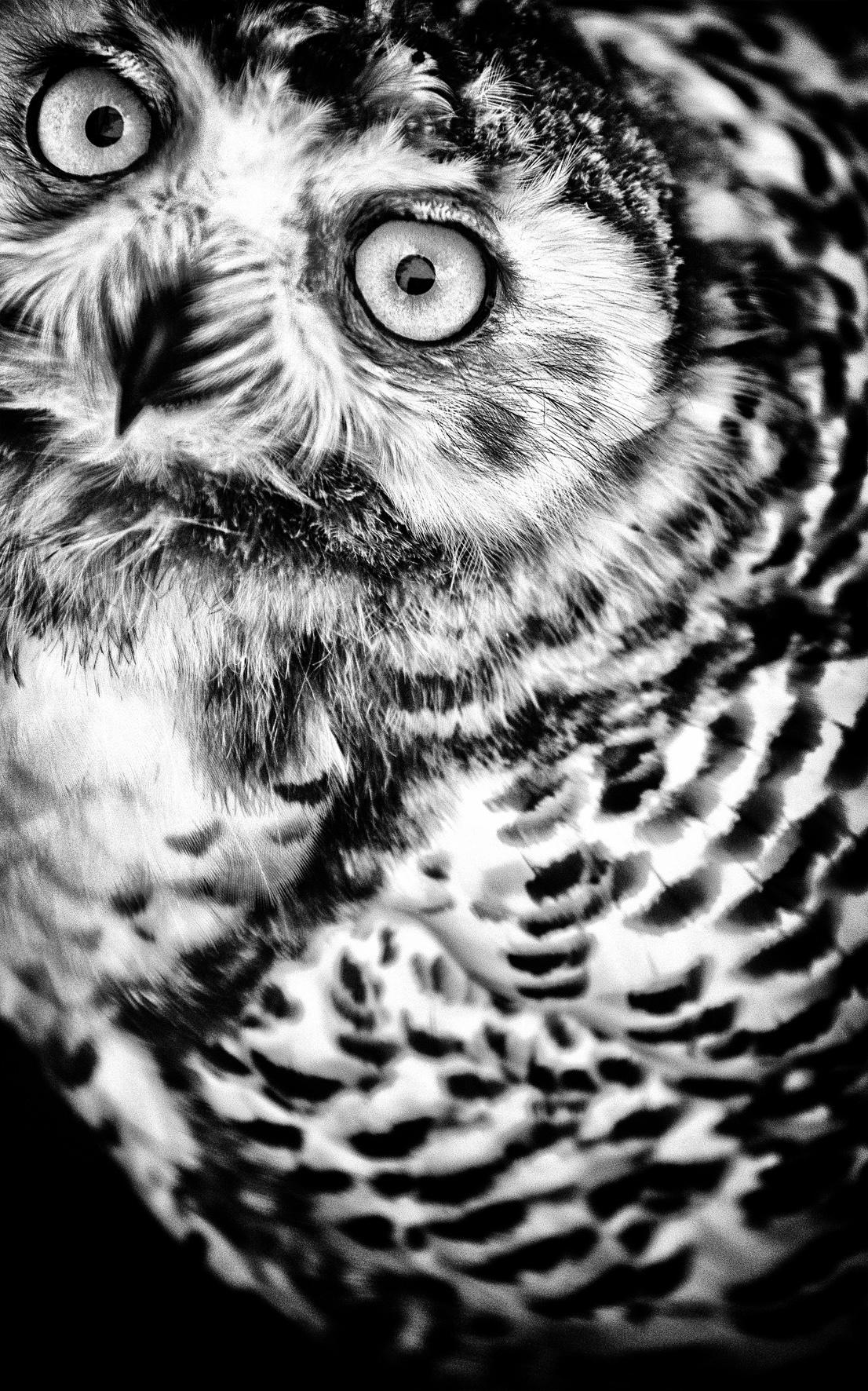 0075_Vogels-aug2013-0660.jpg