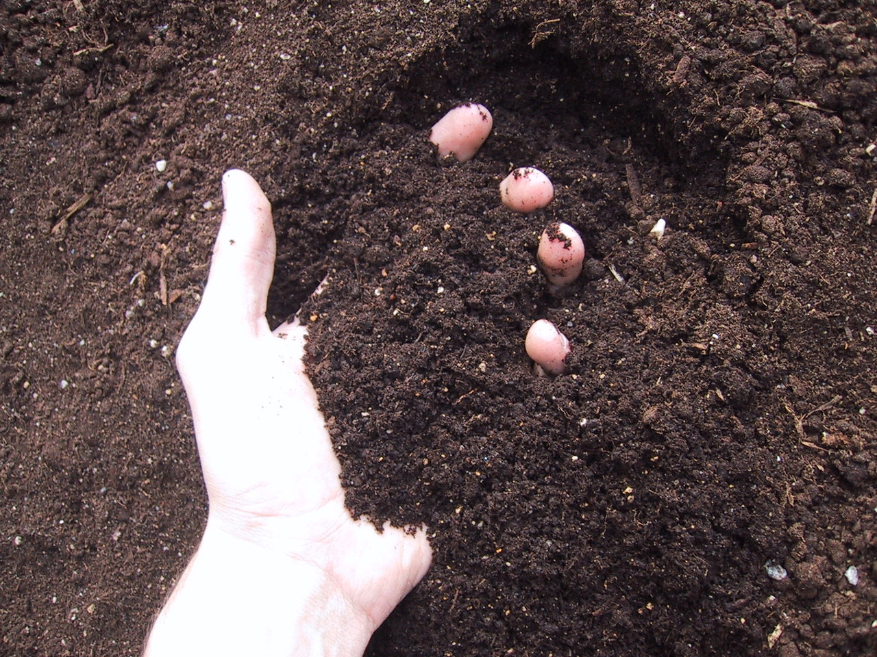 fresh-soil-1468423-1280x960.jpg