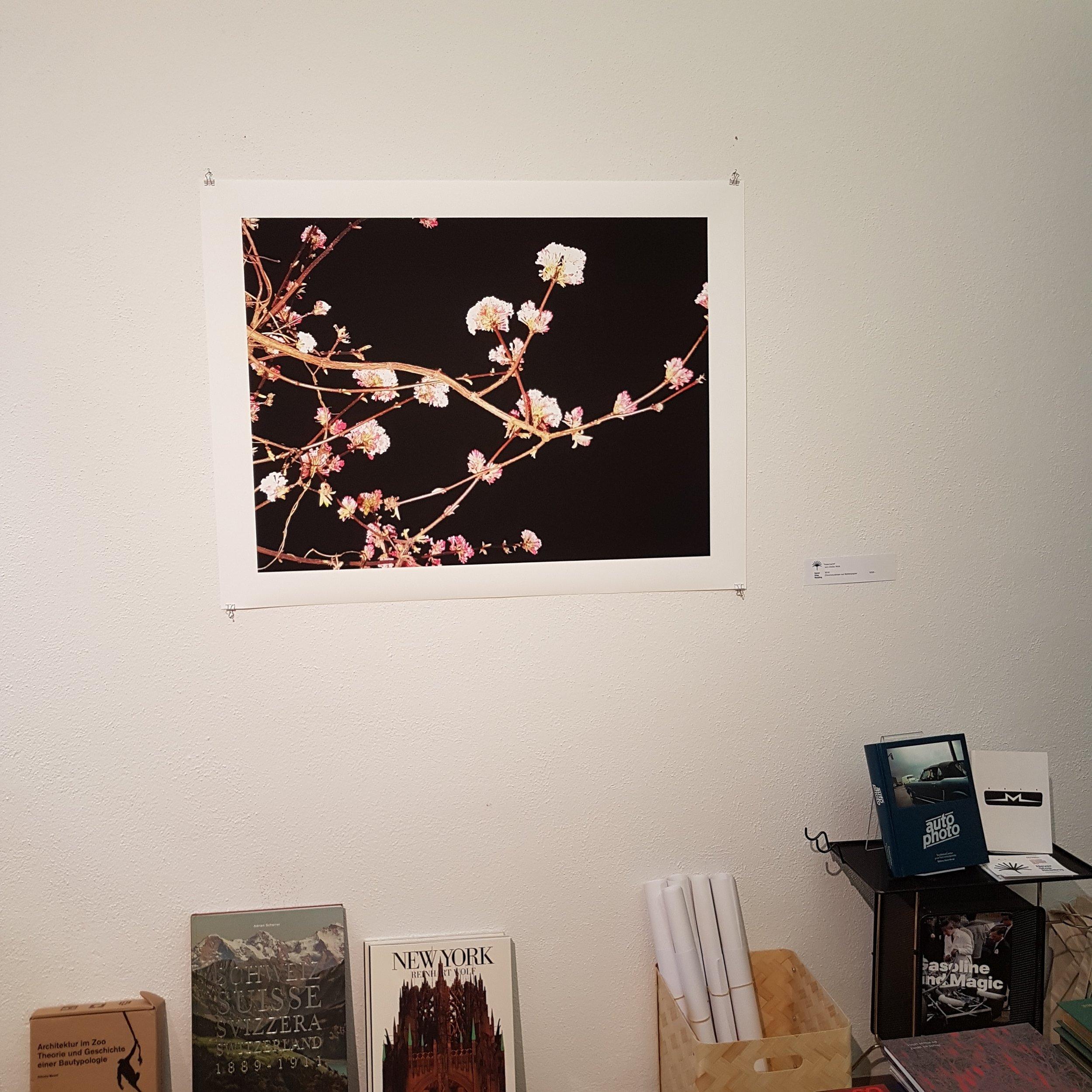 Blumen der Nacht | Cécile Wick