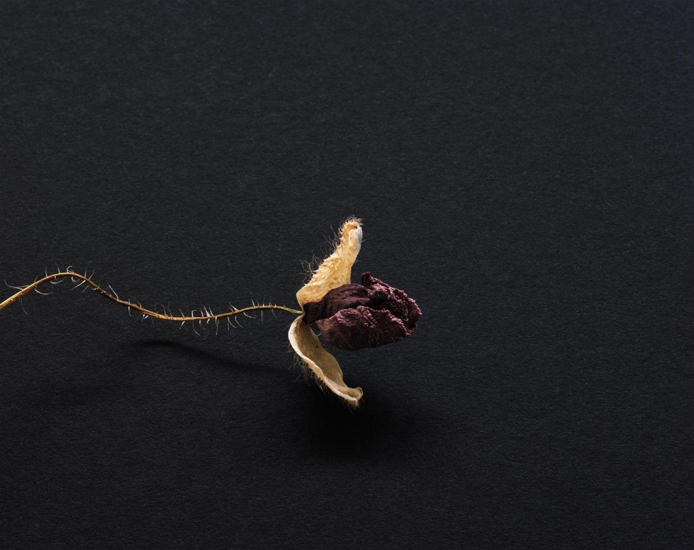 Christophe-Guye-Galerie-Brigitte-Lustenberger-Flowers-XXXVI.jpg