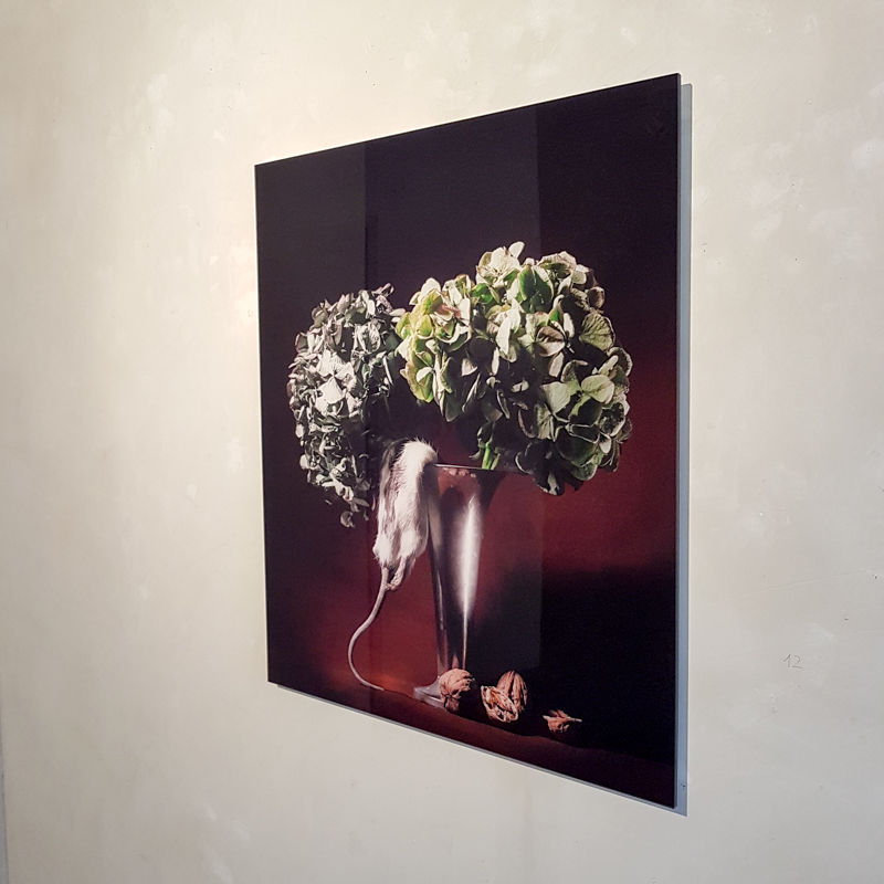 Rat an Hydrangeas | Roberto Greco