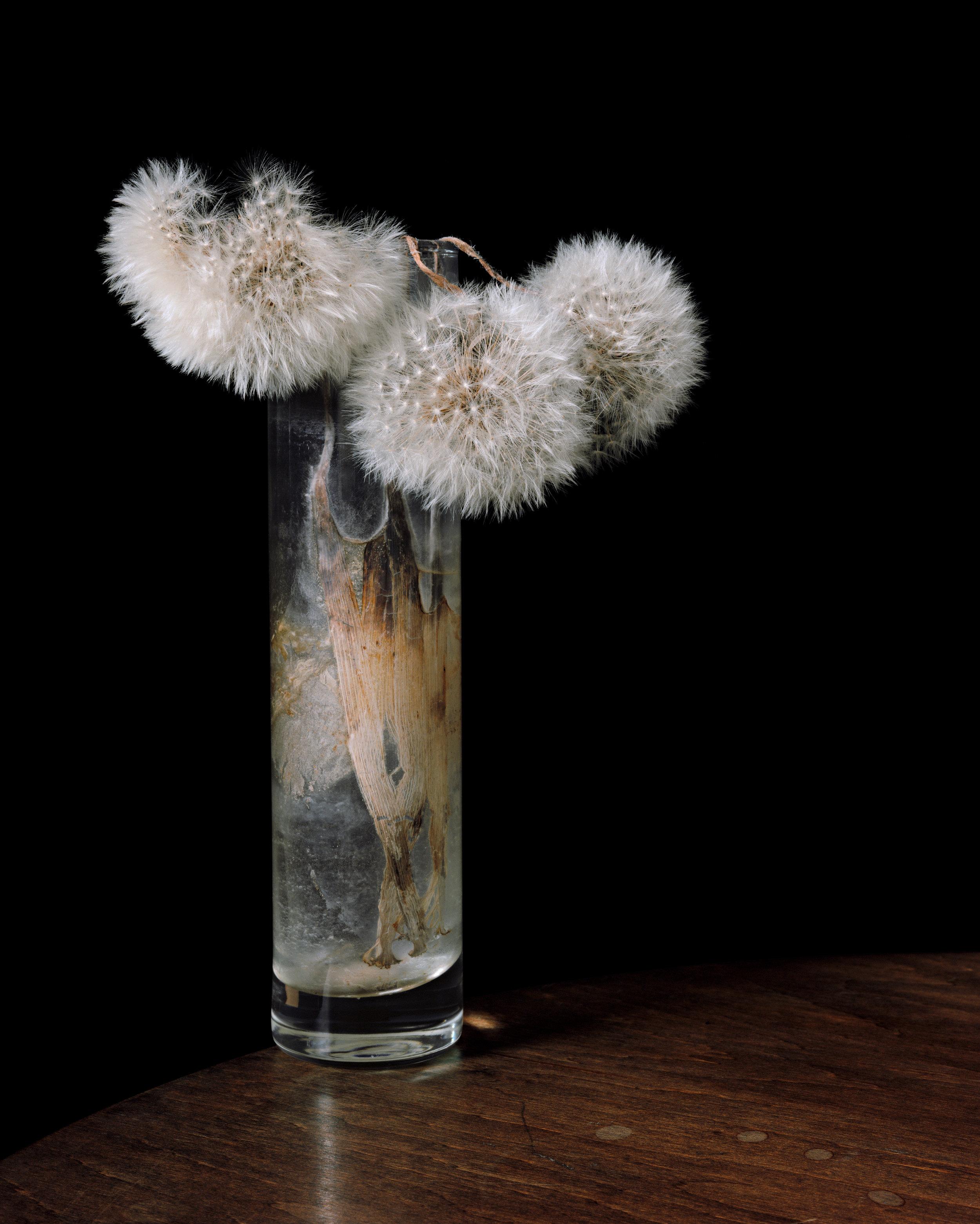 Flowers XXXIX | Brigitte Lustenberger