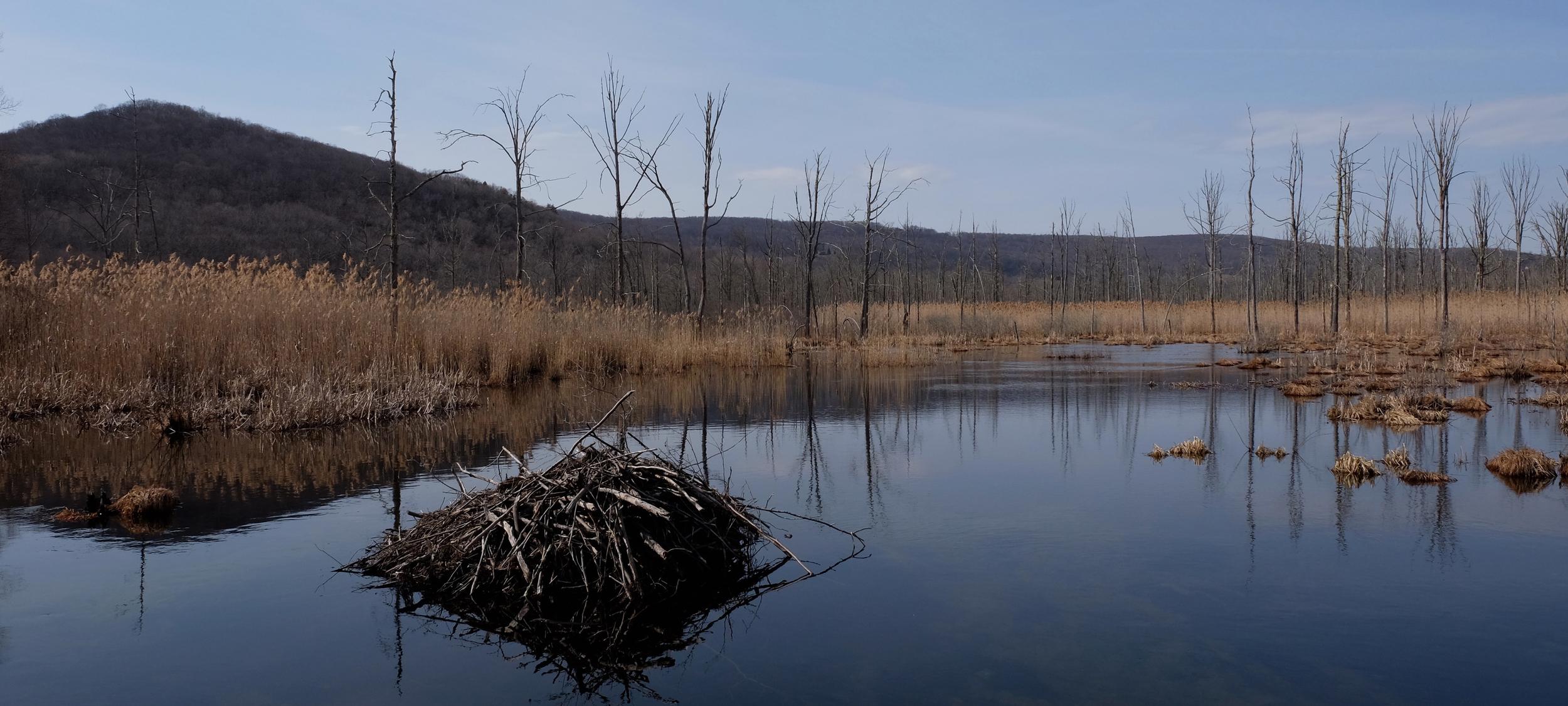 Beaver's Dam