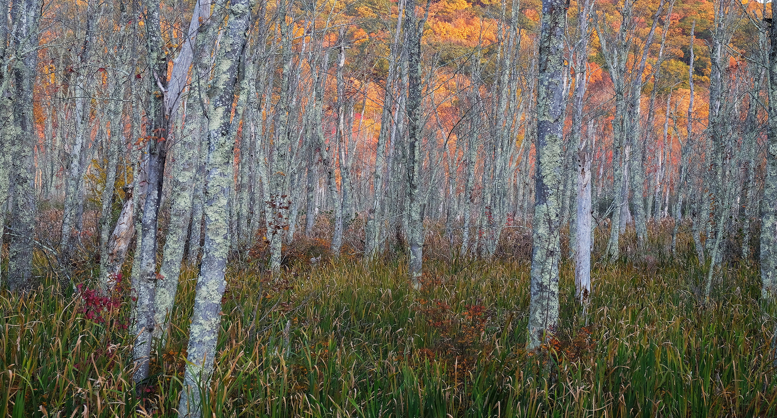 Spectacular Fall Hillside