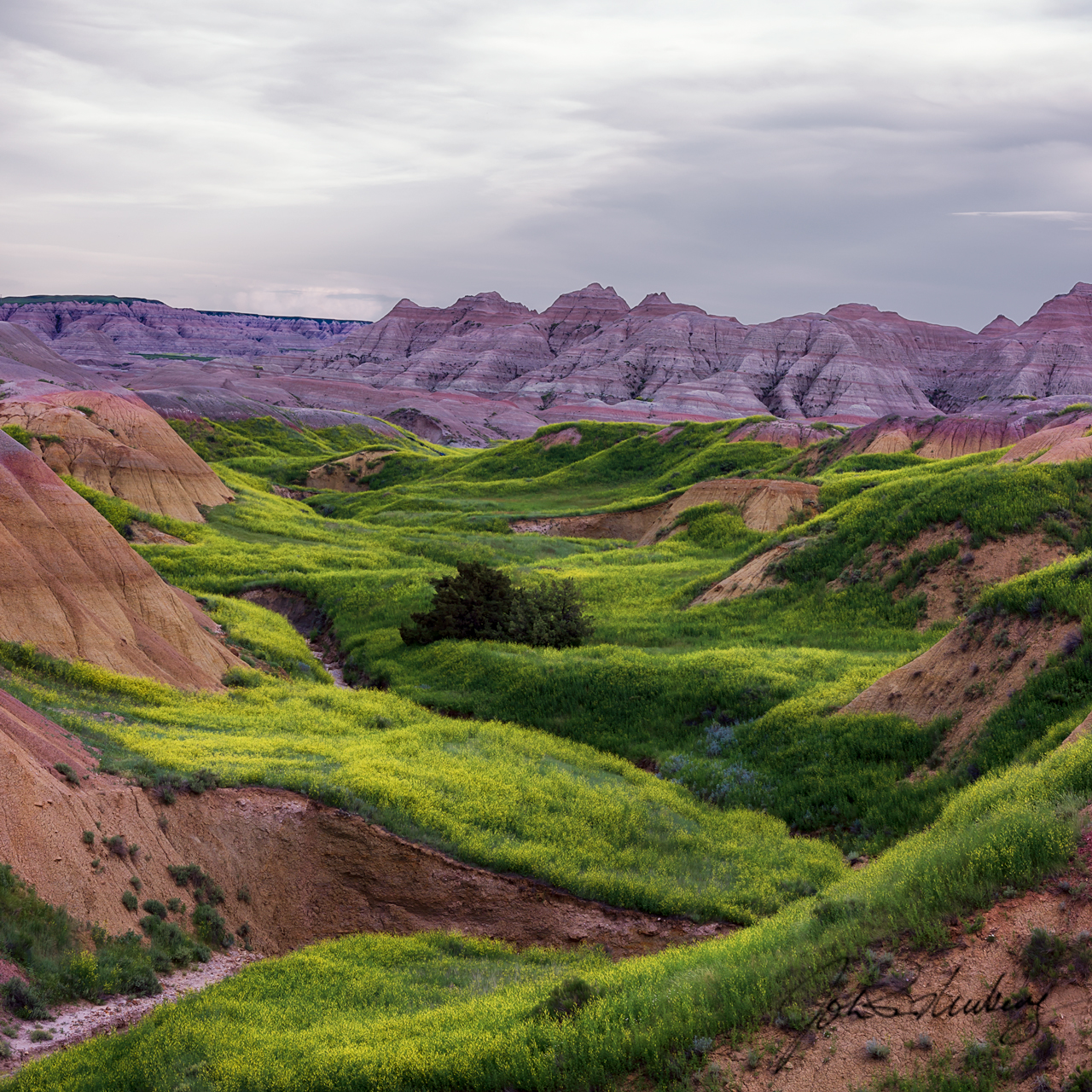 Lush Spring Growth in the Badlands