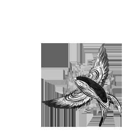 bird logo 2.png