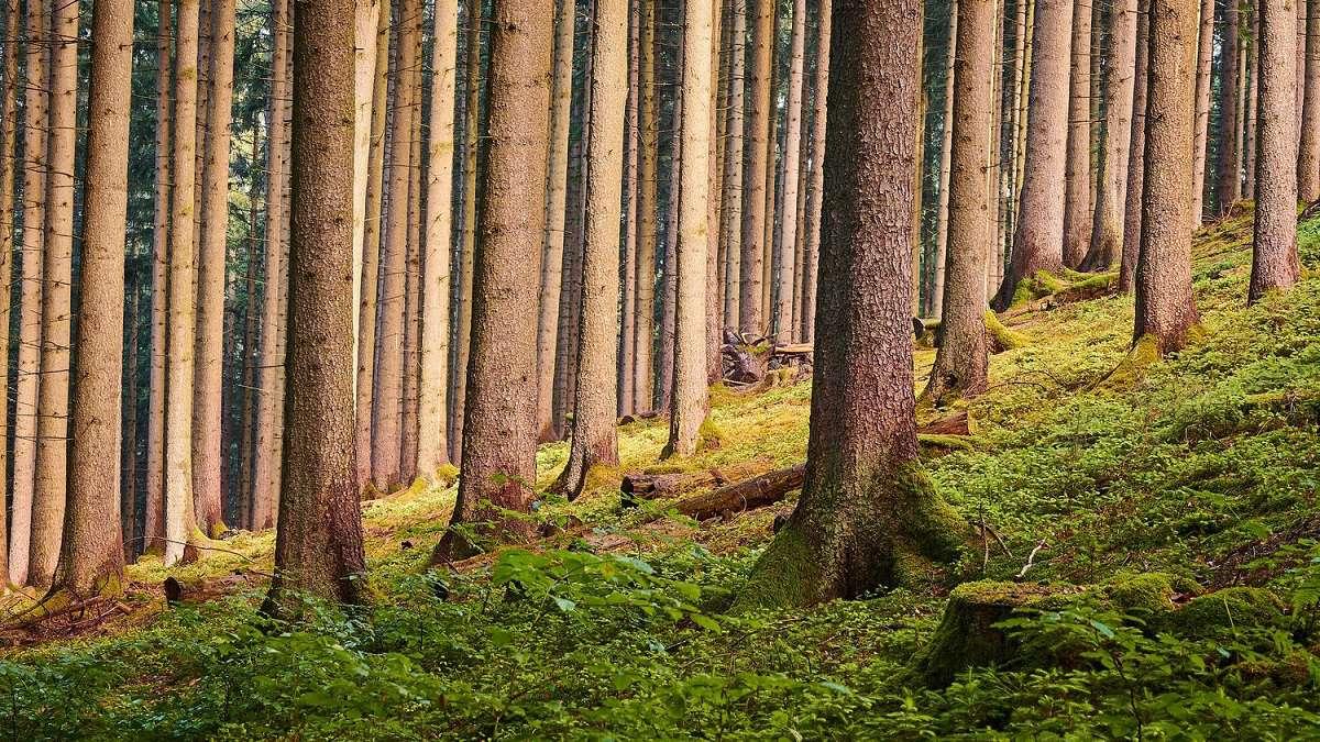 biophilie-arbres-art-entreprise.jpg