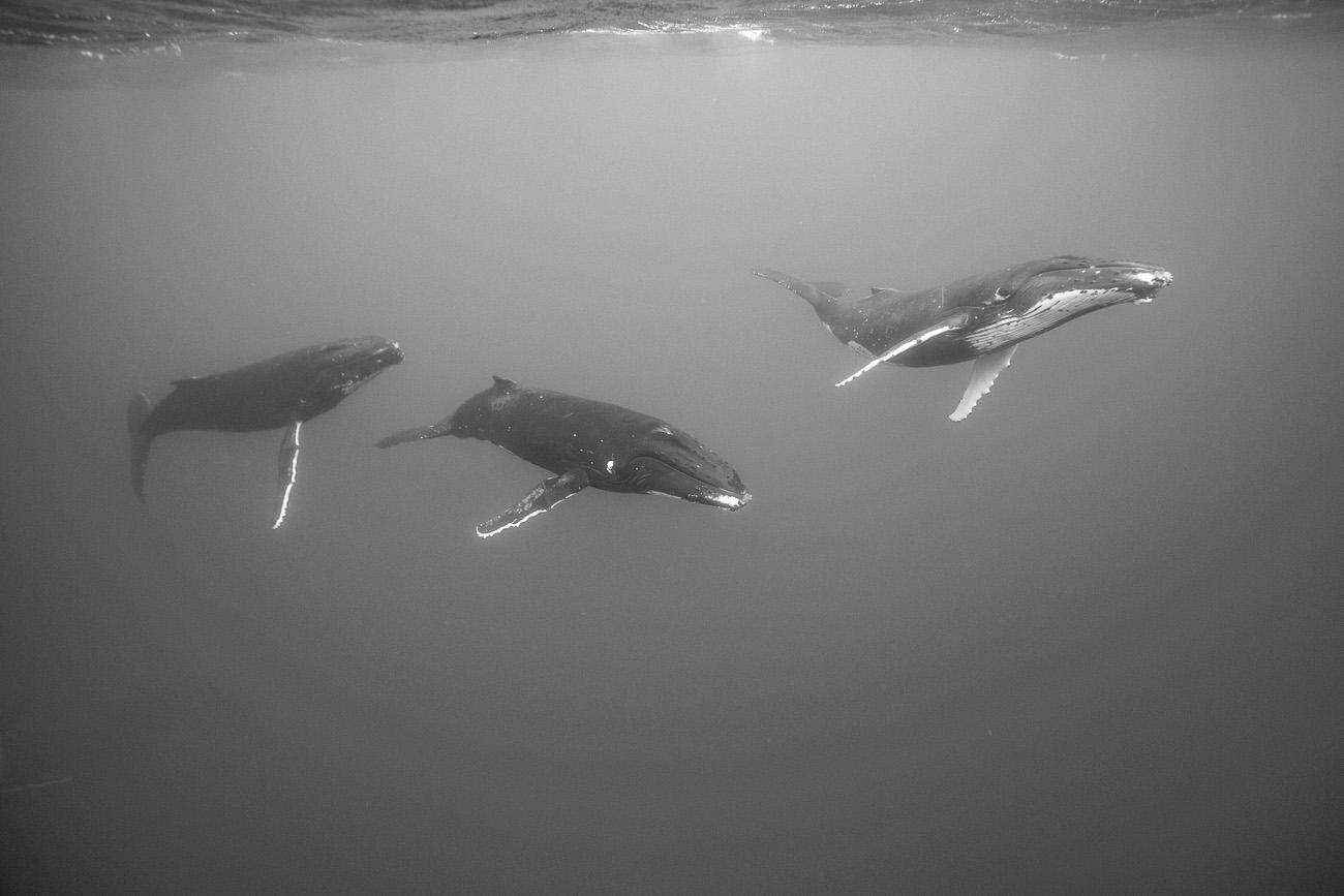 mazille wildlife photo animalière baleine aventure en terre animale 7.jpg