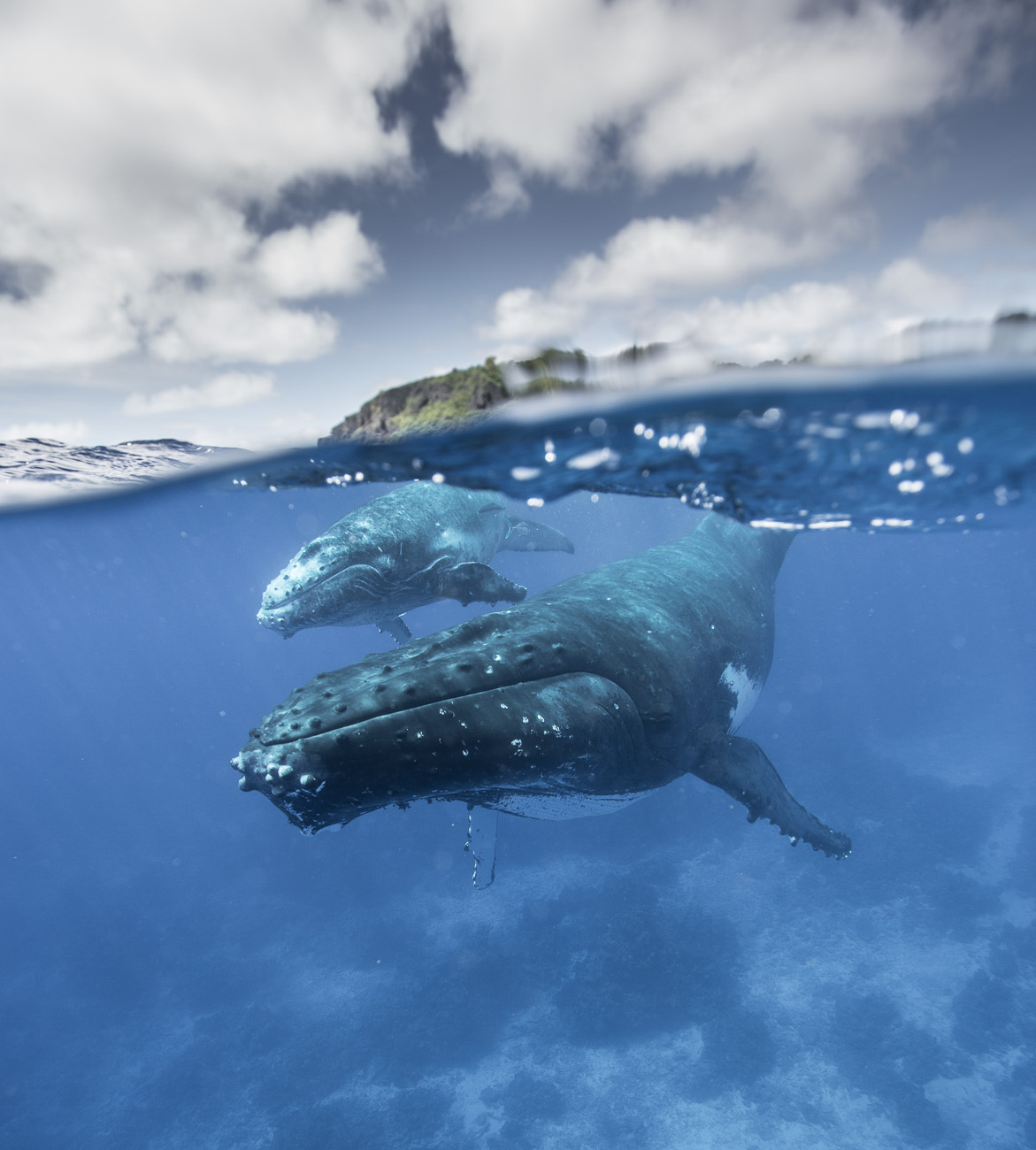 mazille wildlife photo animalière baleine aventure en terre animale 10.jpg
