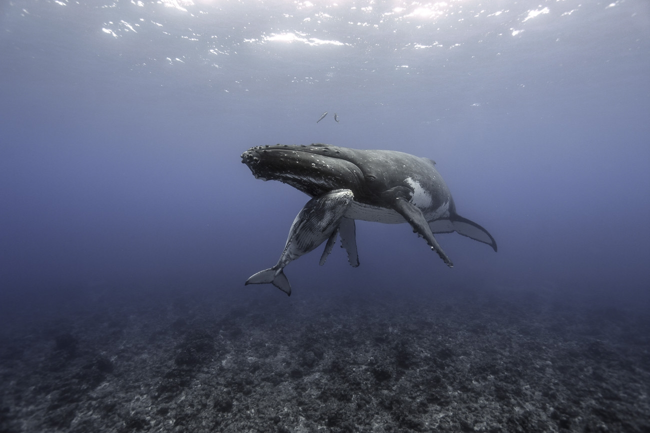 mazille wildlife photo animalière baleine aventure en terre animale 2.jpg