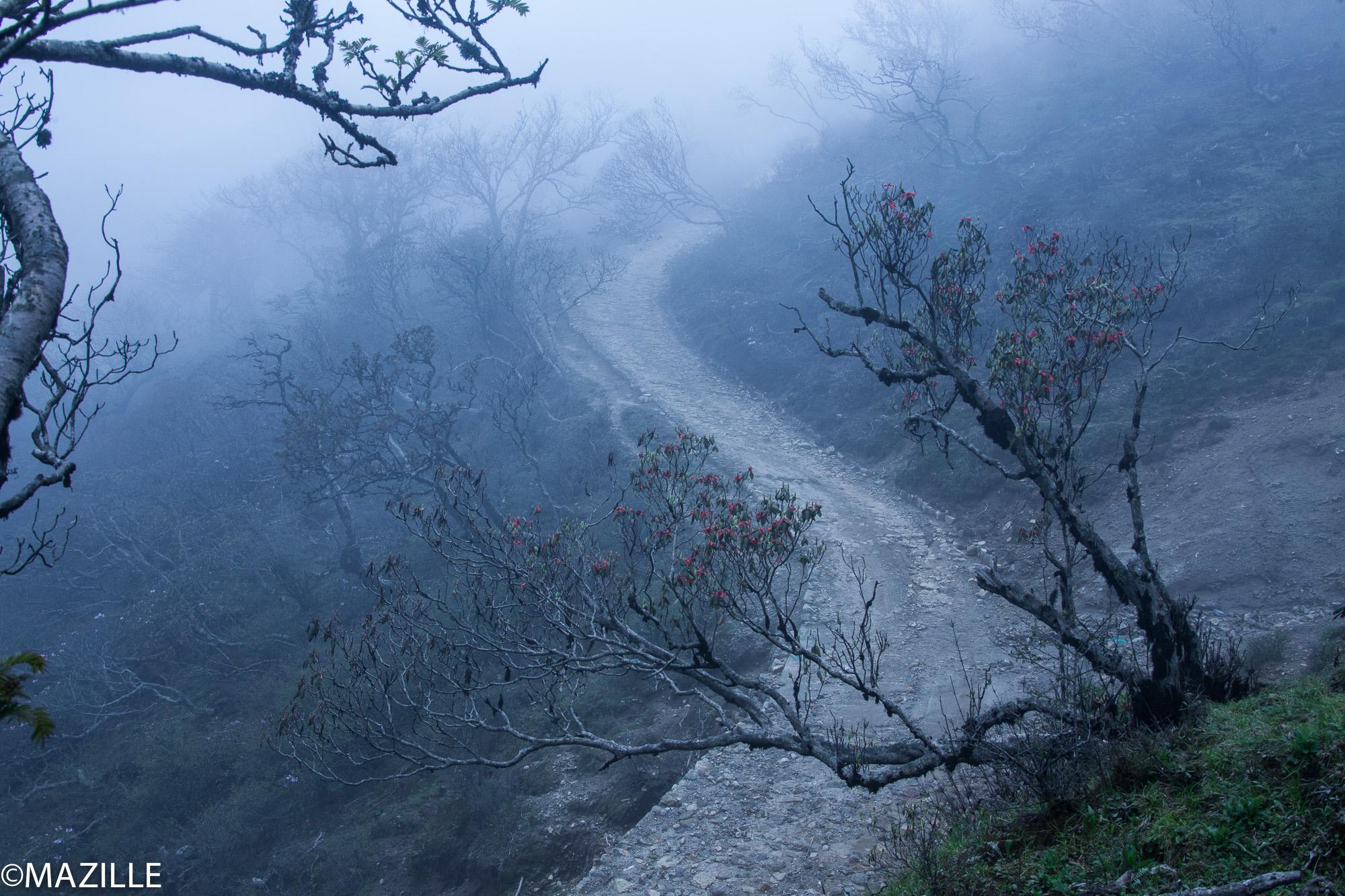 4h, le réveil sonne. Tassy et Fingu sont déjà partis. Cette fois, c'est la montagne tout au fond, là, qu'on doit arpenter. Damber me prévient: de ce côté, c'est le Népal et là: c'est l'Inde. Hors de question de passer la frontière. Si un panda traverse et va en Inde, on le laisse filer. Ok? Ok.