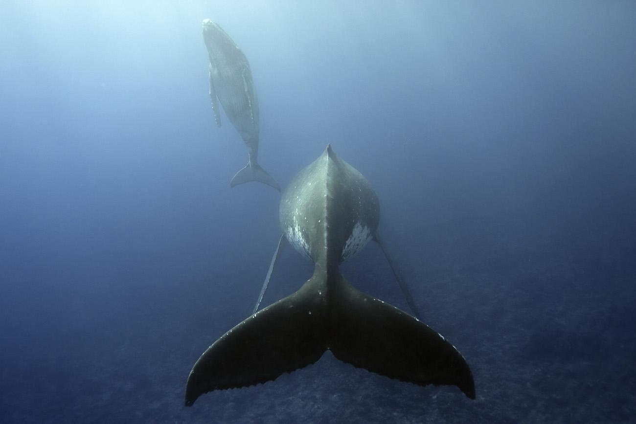 mazille wildlife photo animalière baleine aventure en terre animale 3.jpg