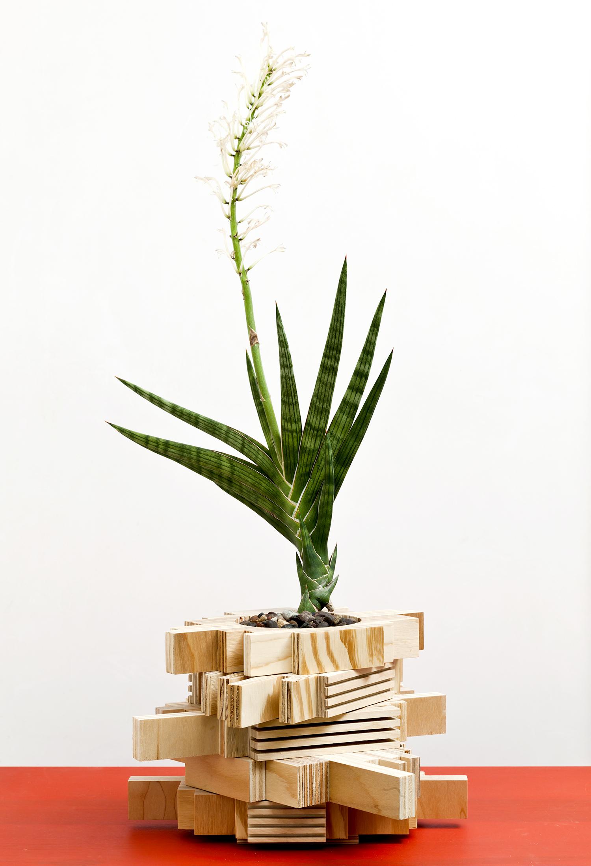 planter 10.jpg