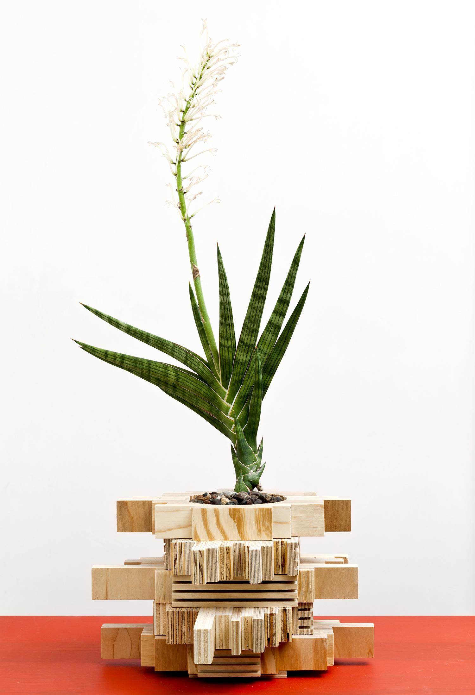 planter 13.jpg