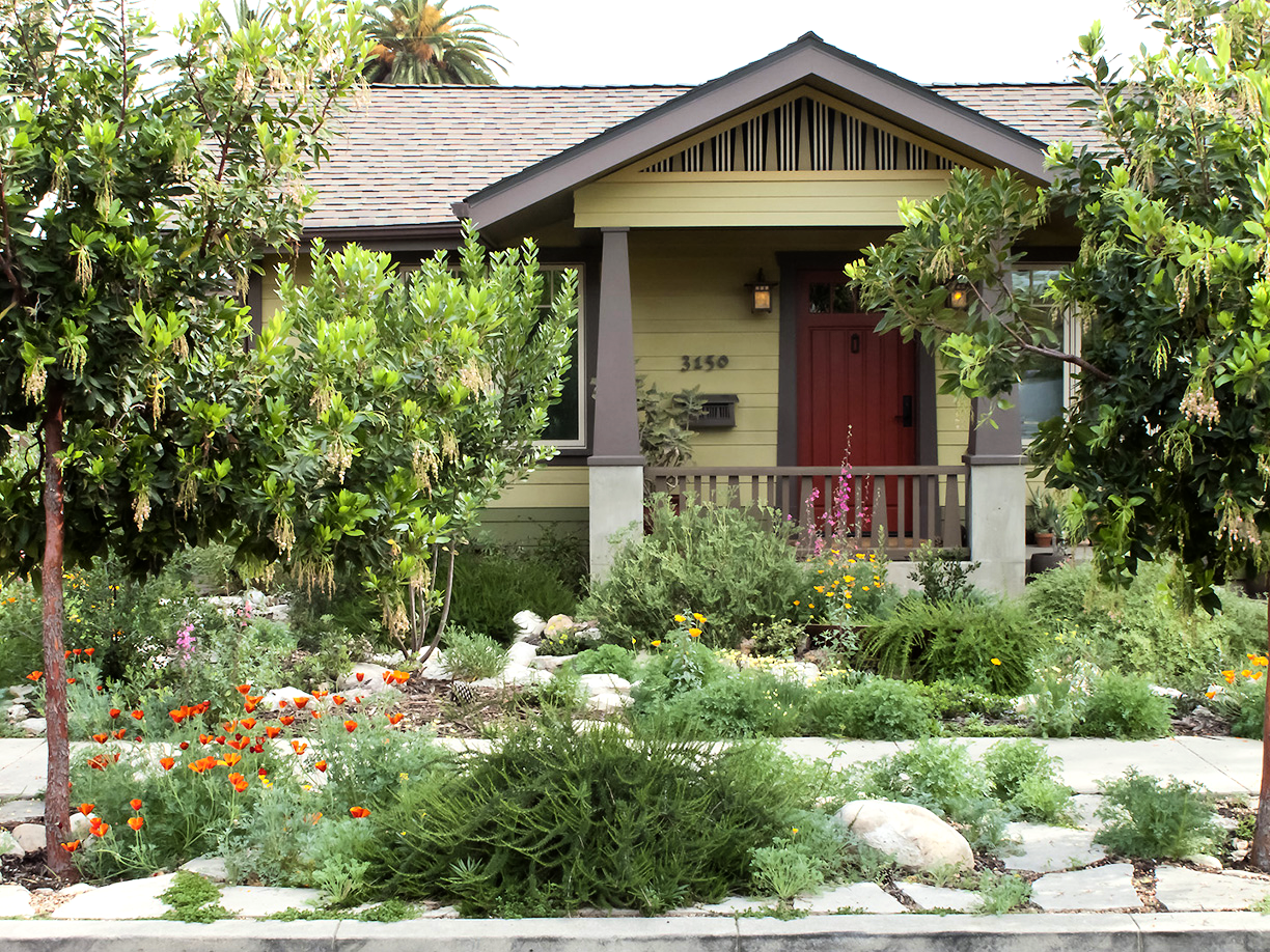 (Front garden. Rainwater swale, salvaged concrete paving and a host of Californian flora)