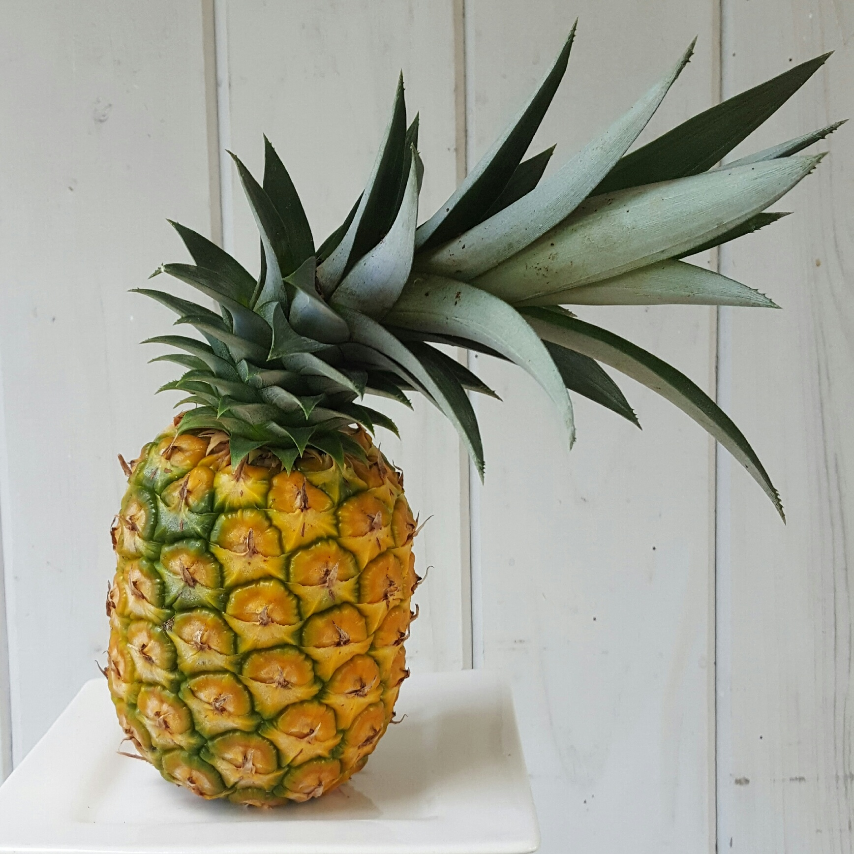 Grown in mom's backyard.  Once you see how long it takes to grow a pineapple, you'll definitely appreciate them more!