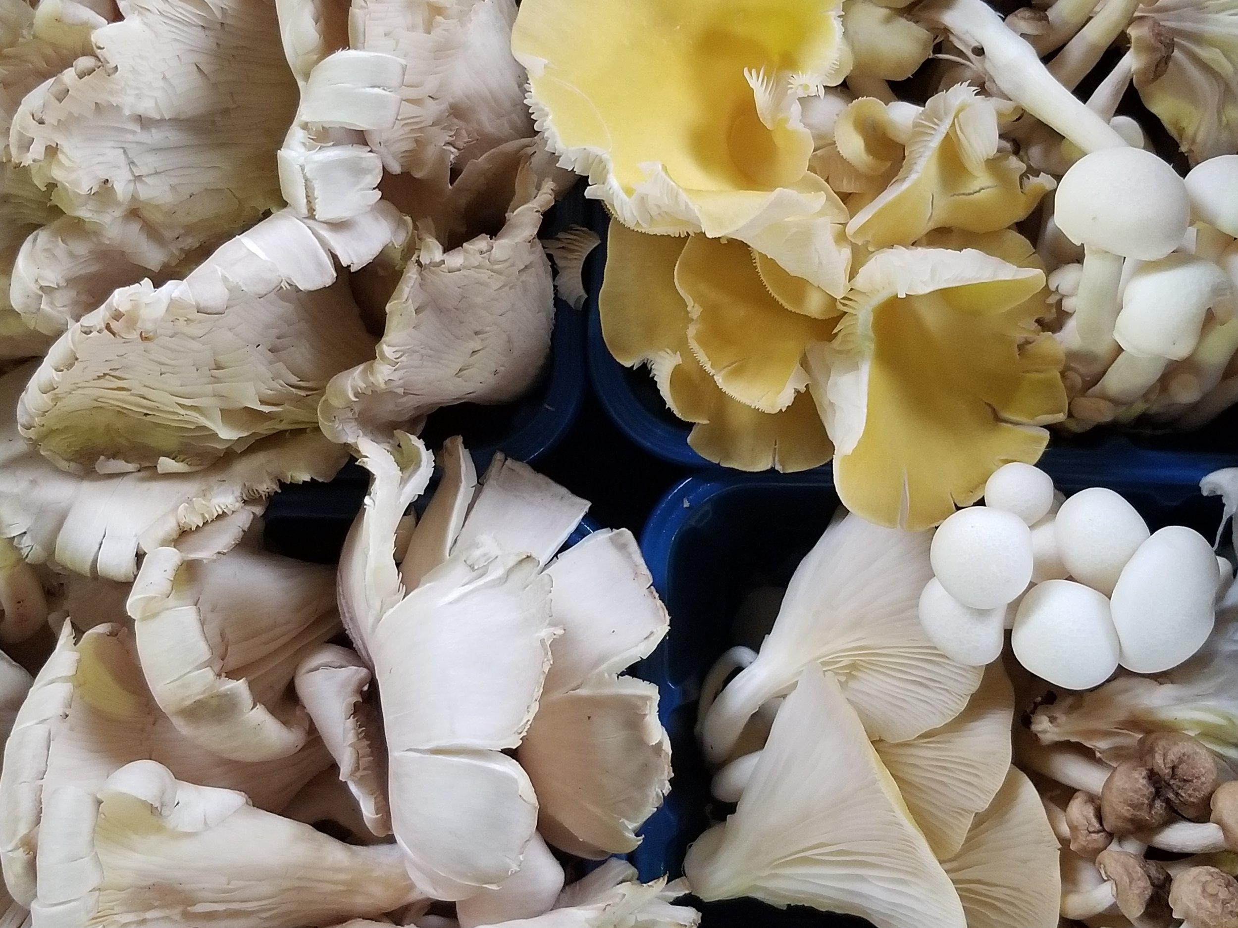 Baltimore's Farmer's Market blew me away - amazing wild mushrooms