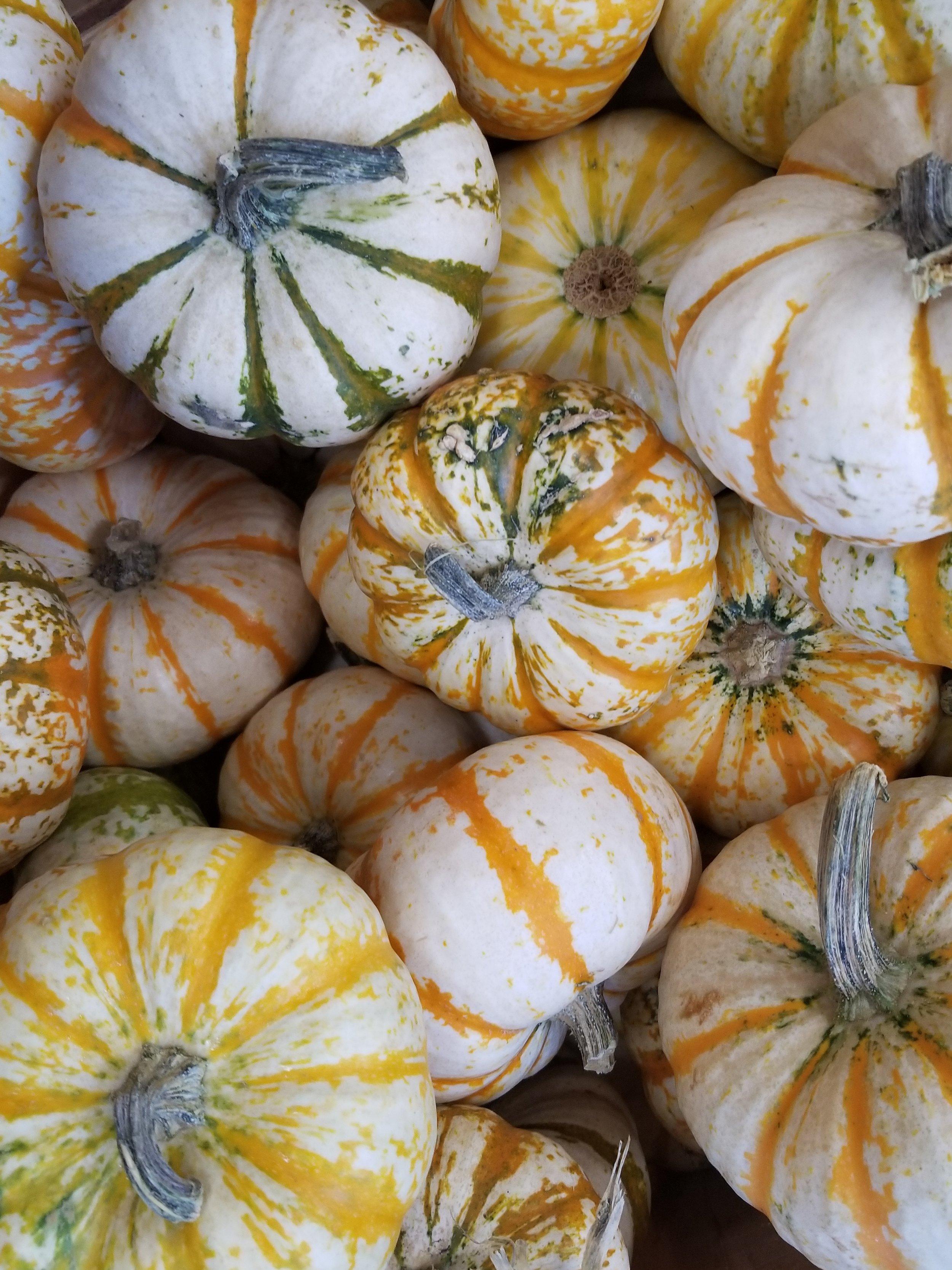 October 1st - October.jpg