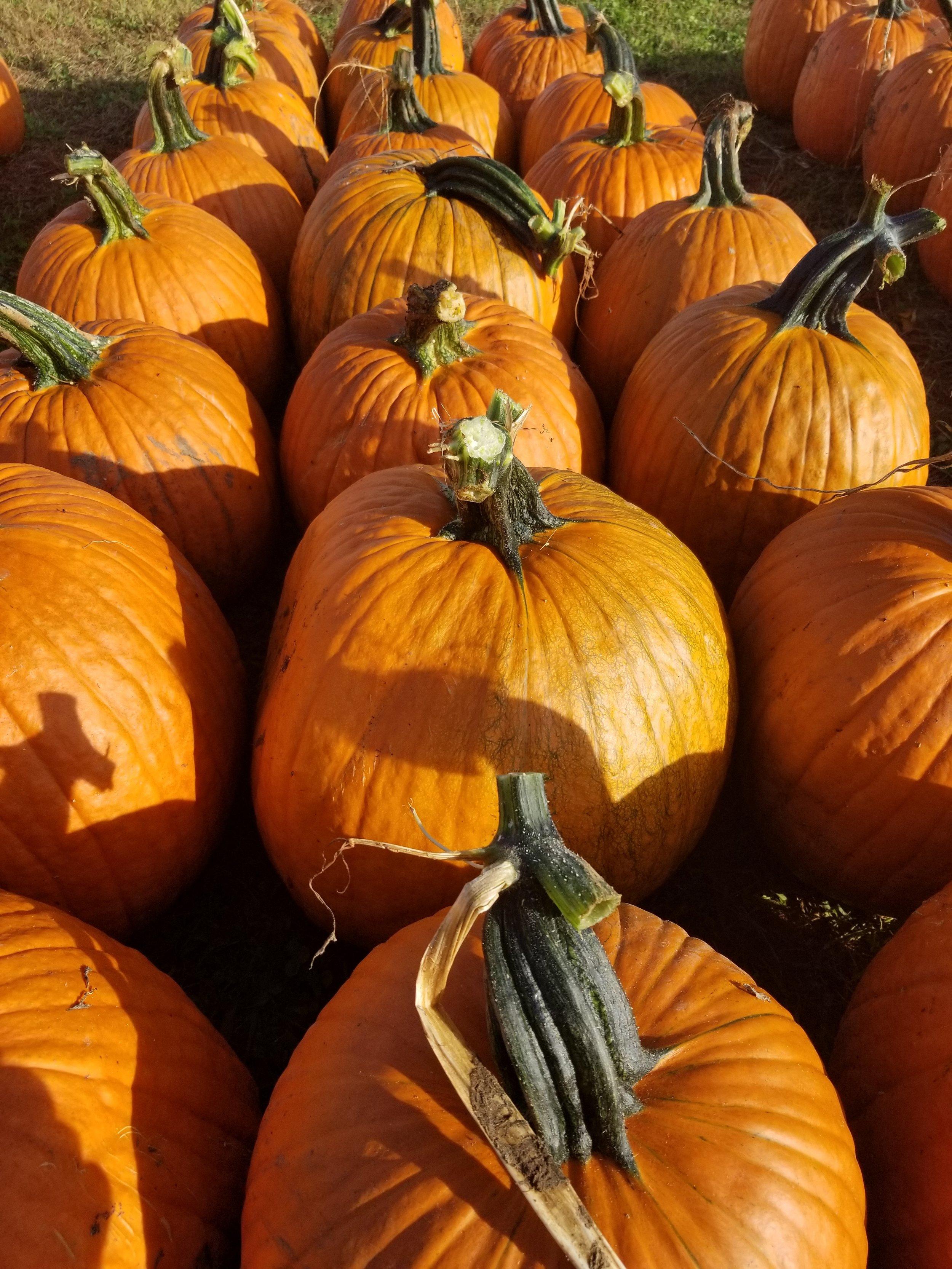 October 1st - Pumpkin.jpg