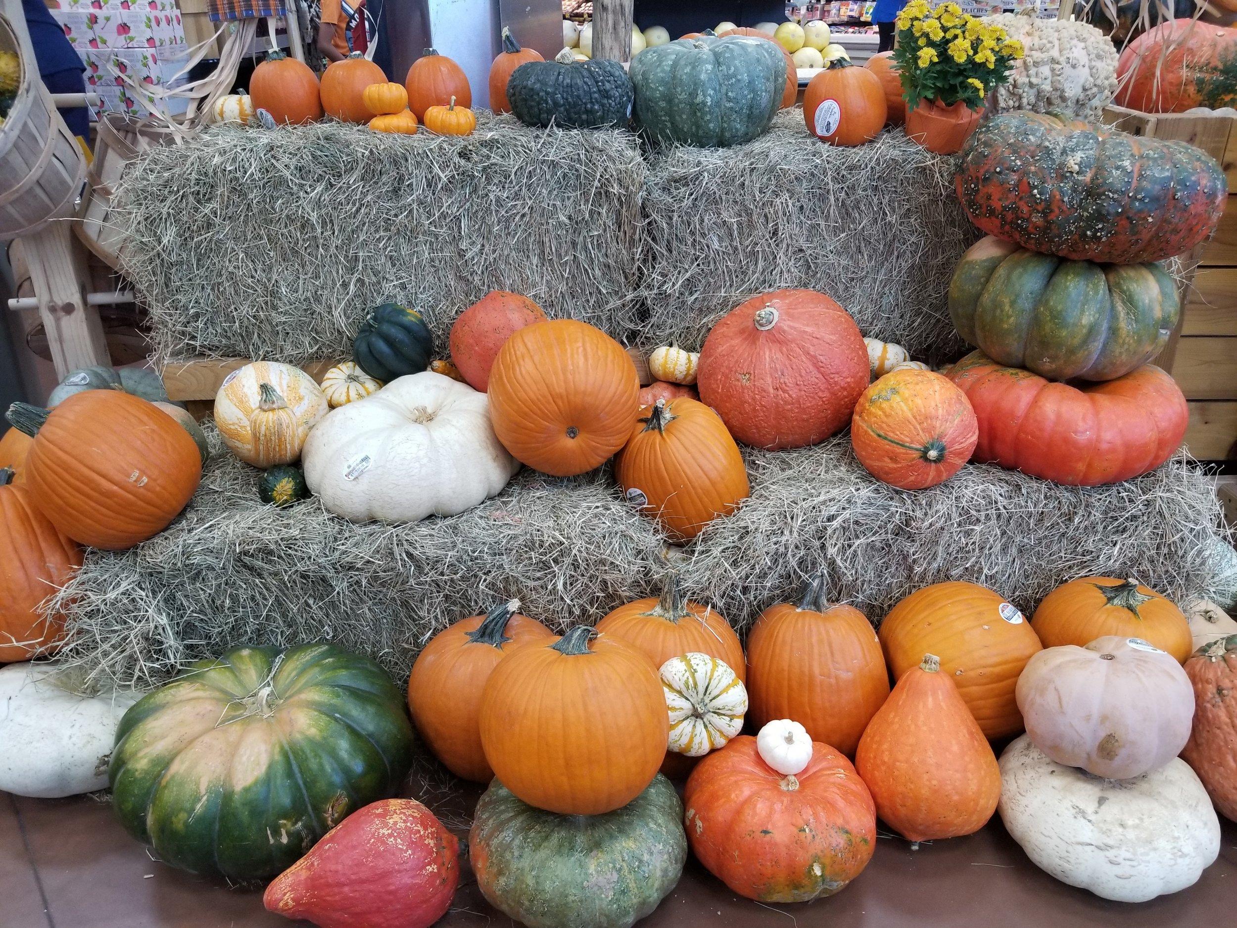 October 1st - Pumpkins oh my.jpg