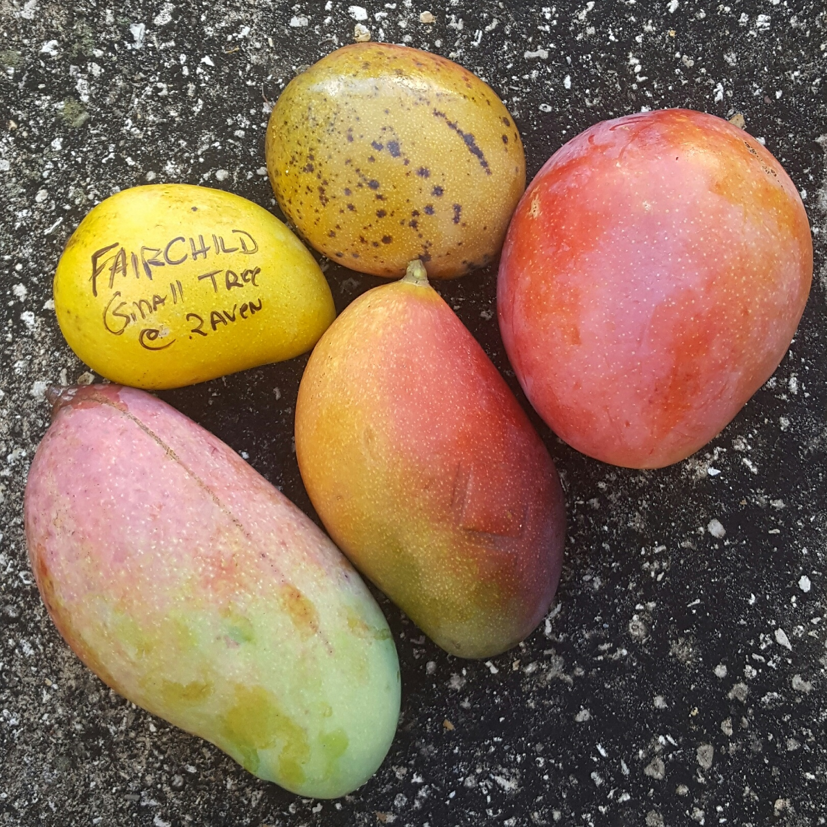 My Week Off - Mango Varieties.jpg