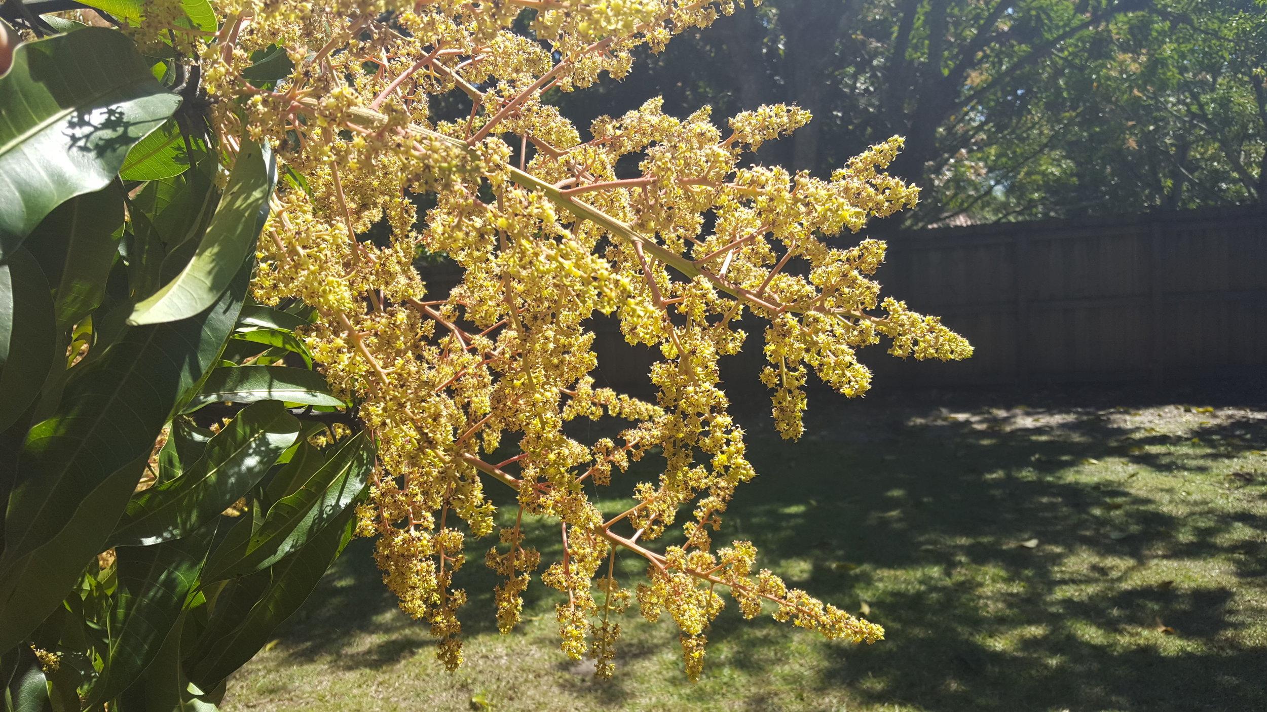 Hello Spring - Carambola Bloom.jpg