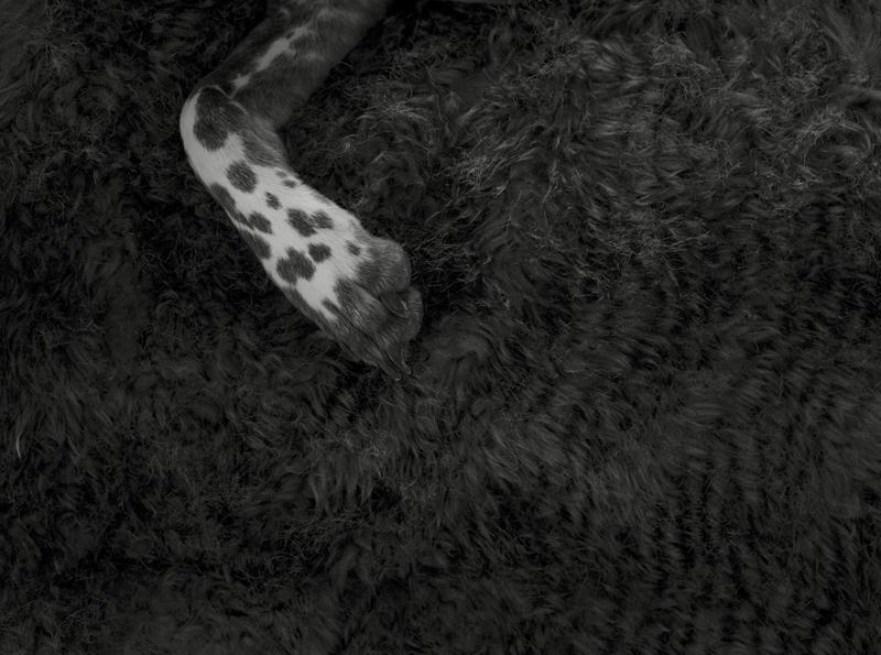 Fables ( zzz )  Épreuve à la gélatine argentique  41 x 51 cm